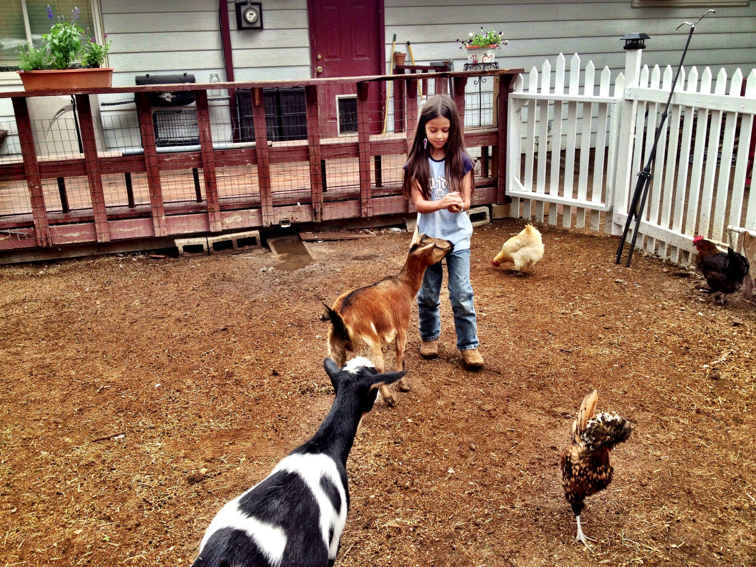 8-year-old Isabella with urban farm animals