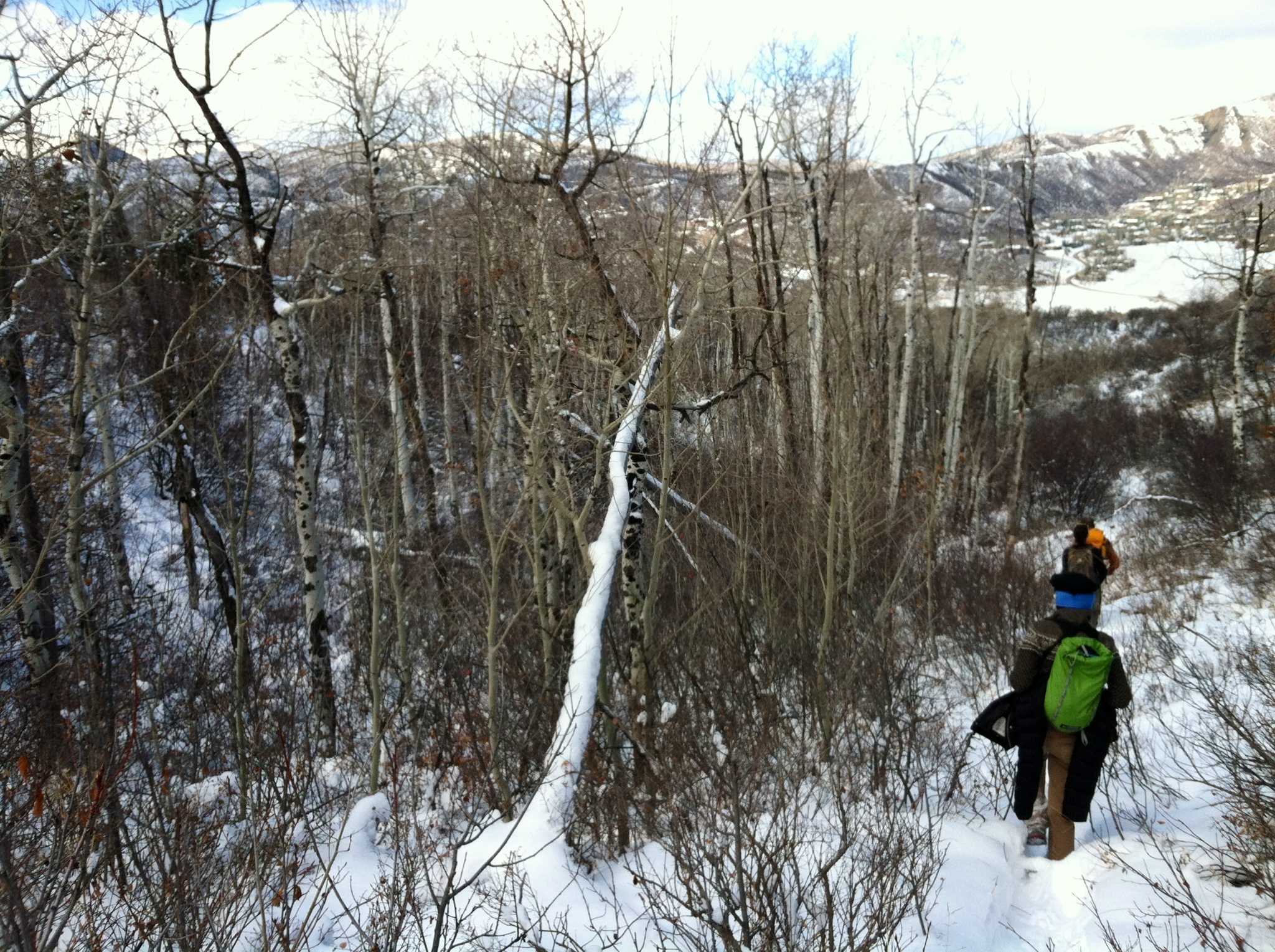 Scientists chose to erect a soil moisture monitoring tower in this aspen grove because it's in decline due to drought.