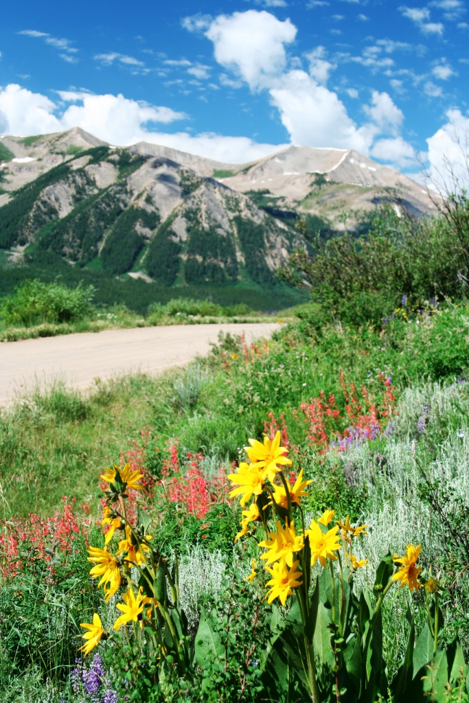 Wildflowers Galore by Whetstone Mountain in Crested Butte