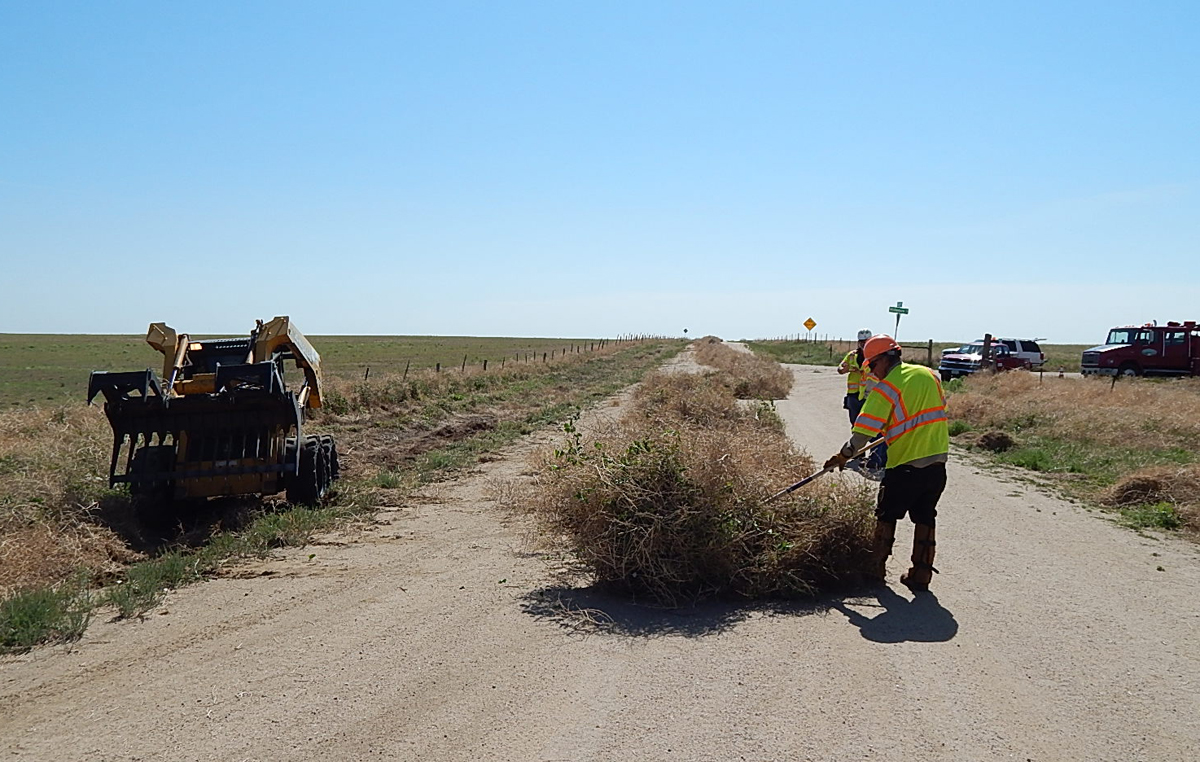 Workers line up tumbleweed for the Tumbleweed Eater