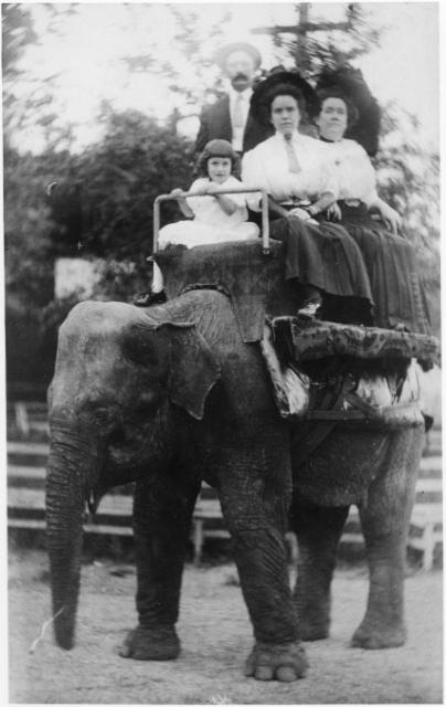 A famliy takes an elephant ride at John Coughlin's Zoo Park in Ivywild