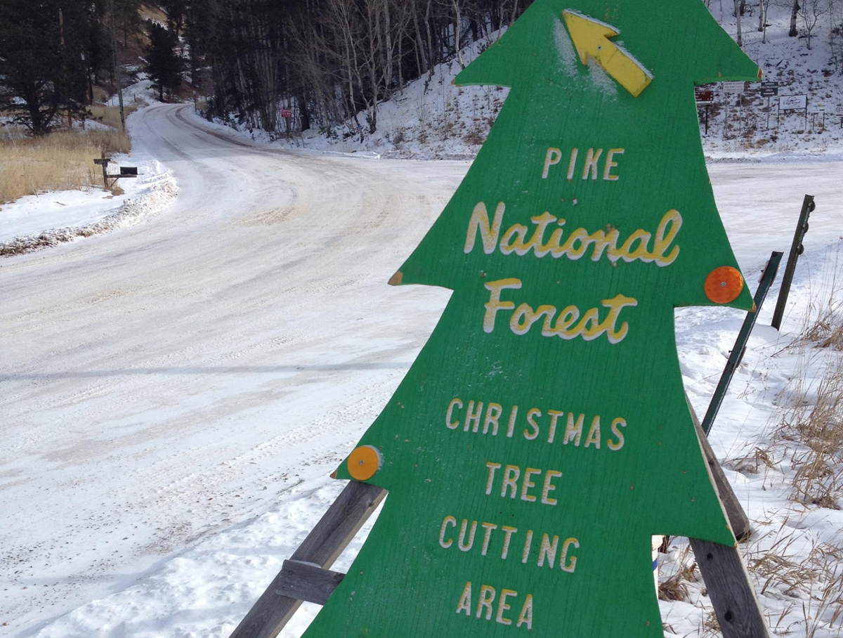 A sign points the way to where permit holders can cut down a tree on Pike Naitonal Forest (2013).