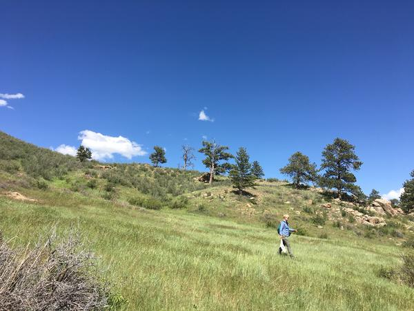Entomologist Christy Bell at Curt Gowdy State Park.