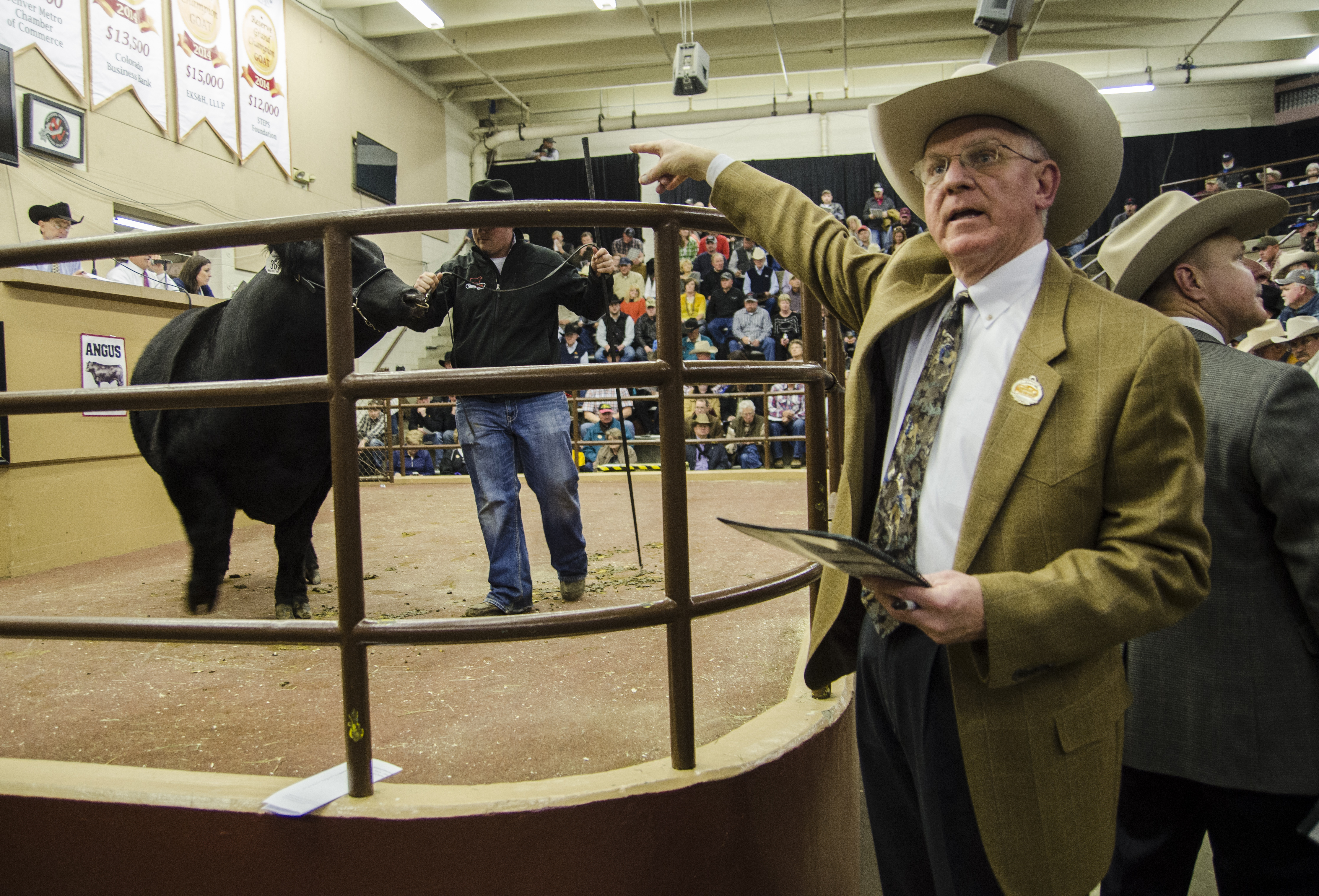 Photo: Terry Cotton at steer auction