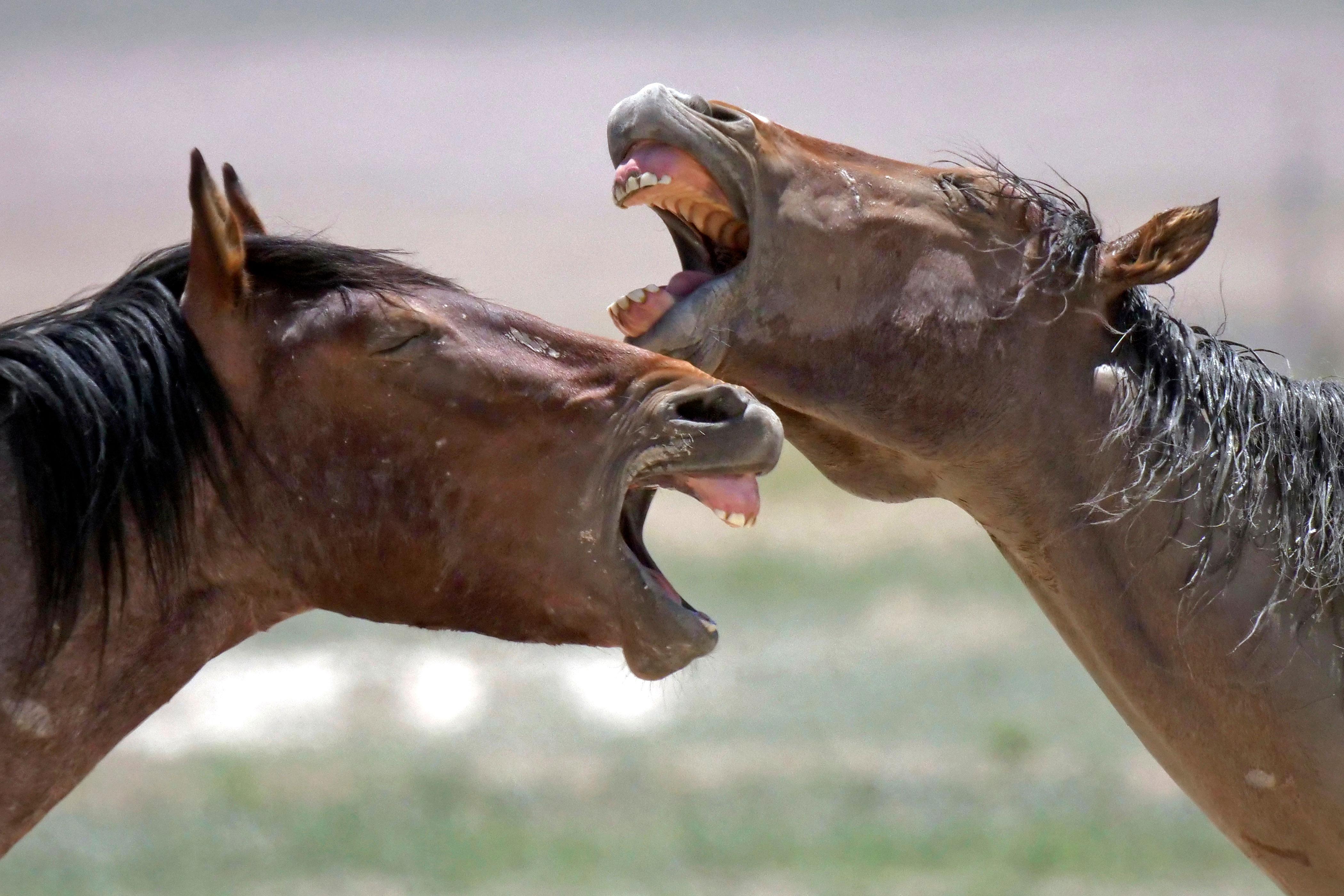 Wild horses occupy a watering hole outside Salt Lake City, Utah, June 29, 2018.