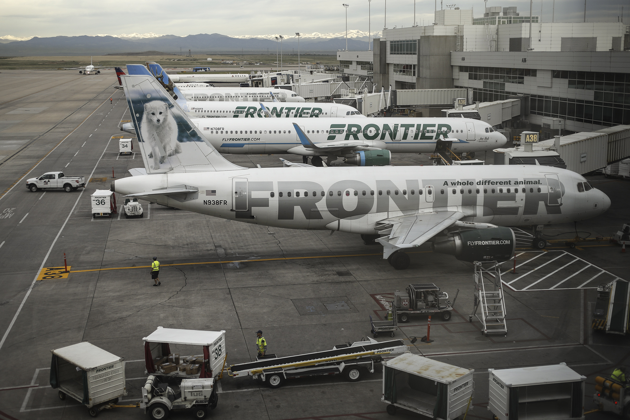 Frontier Airlines jetliners sit at gates on the A concourse at Denver International Airport in May 2017.