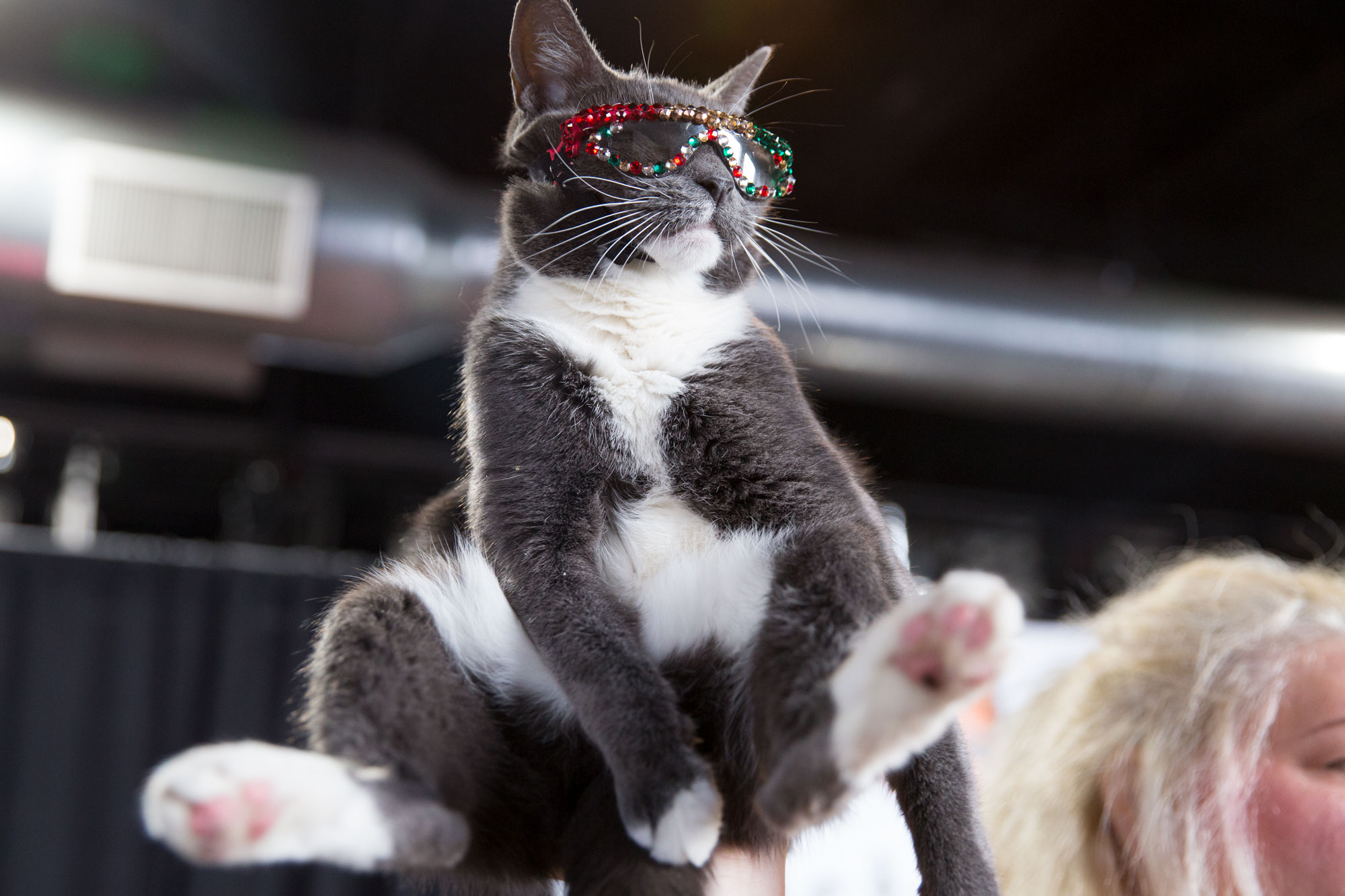 <p>Cats and cat people rule at the first Snowcats Cat Convention in Denver, Saturday, Dec. 8, 2018.</p>