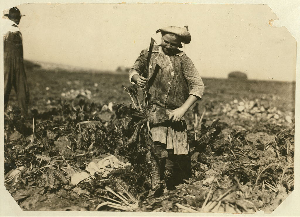 Photo: Pauline Reiber, 9 years old, tops beets on the High Plains near Sterling, Colorado, in 1915.