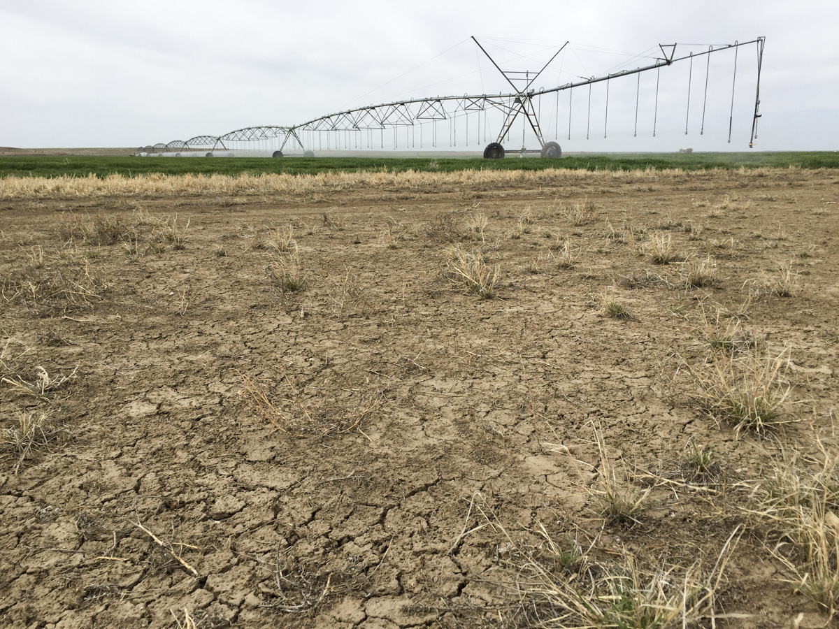 <p>Irrigated farmland adjacent to bone dry soil offers a stark contrast in Prowers County. Irrigation canals extending from the Arkansas River make all the difference.</p>