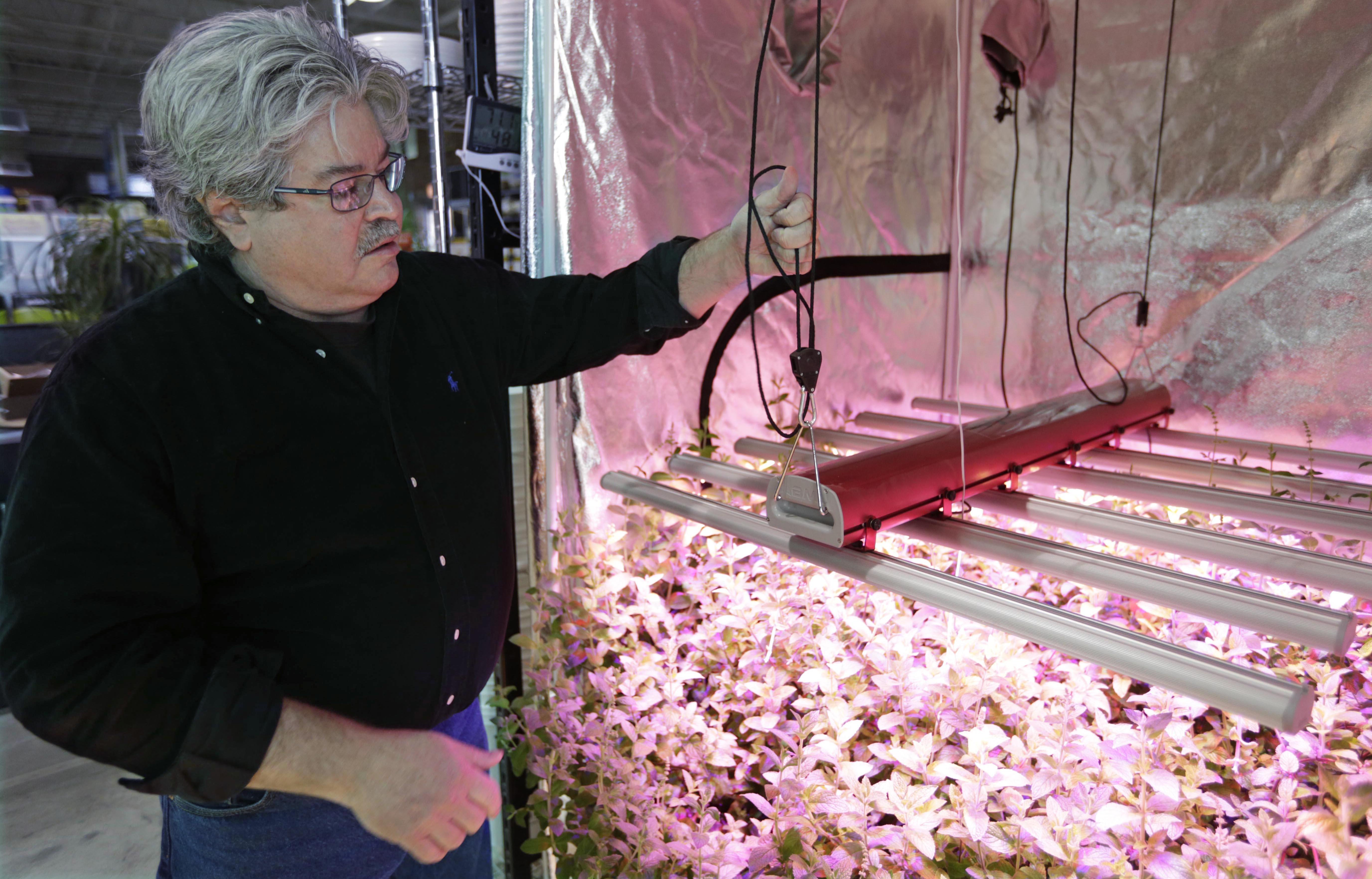 Photo: Indoor grower (AP Photo)