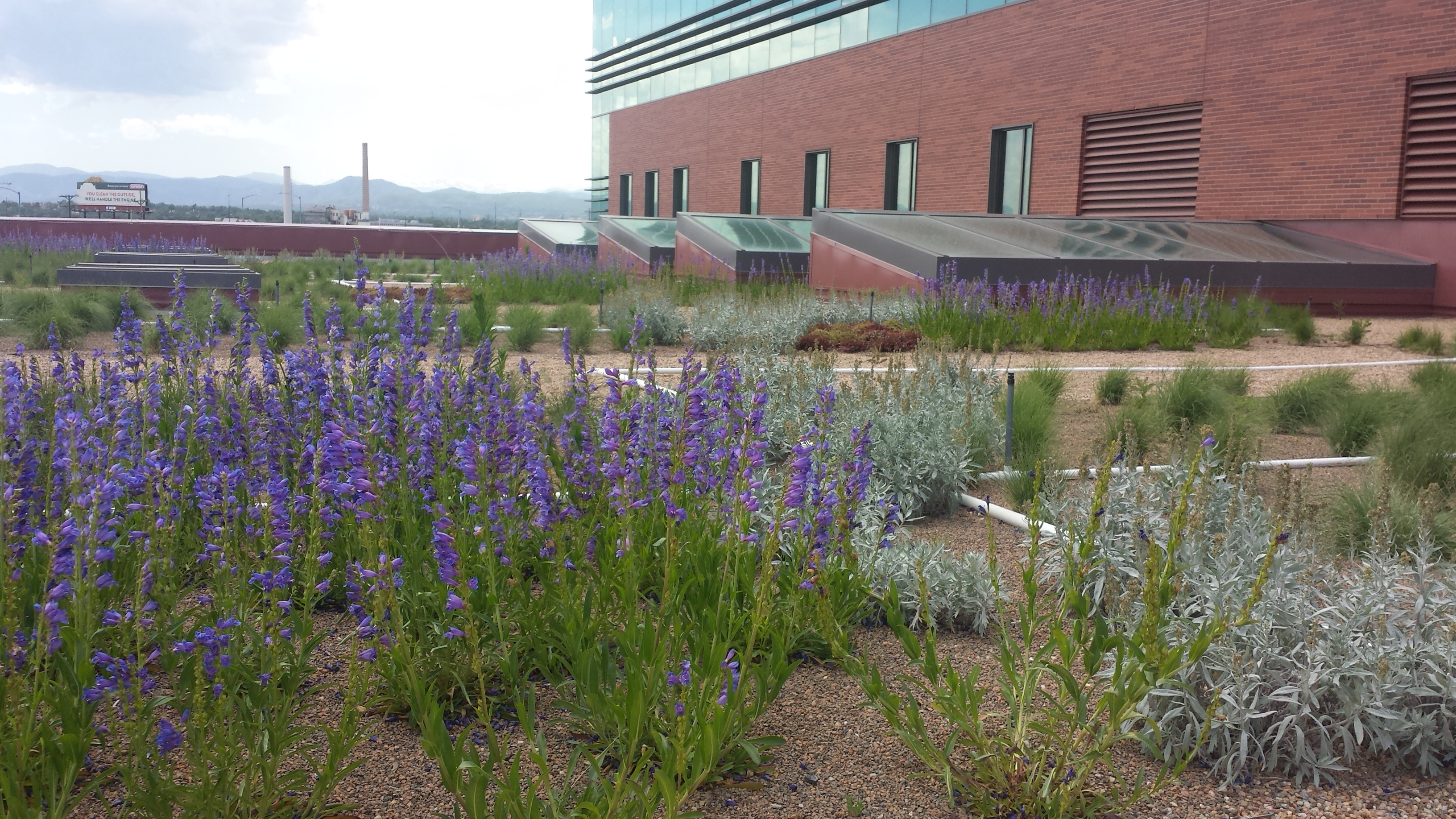 Photo: Green Roof Community College of Denver