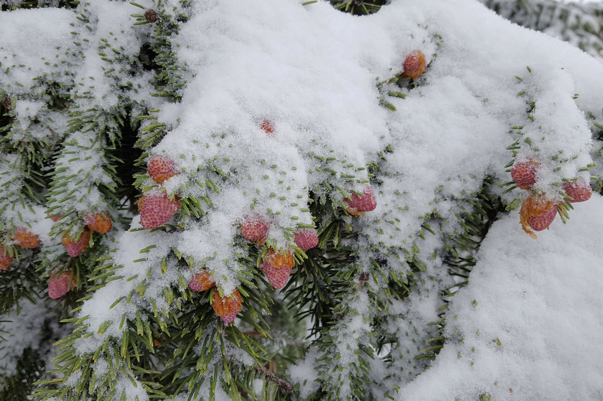 Photo: Master Gardener Winter Garden