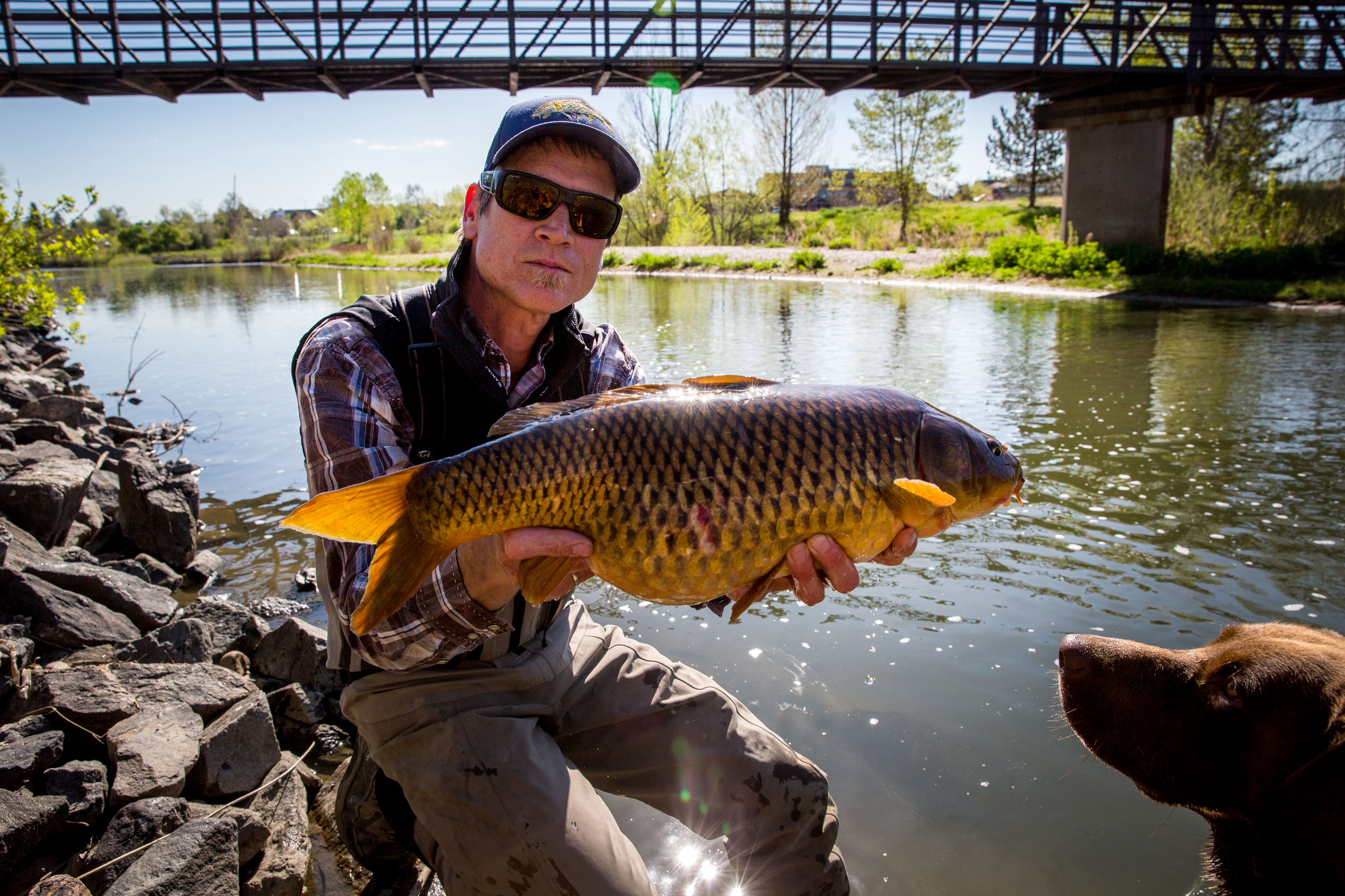 <p>Dan Lundahlhandles a carp he caught Monday morning May 13, 2019 on the South Plattein Littleton, while his dog Ruger looks on.</p>