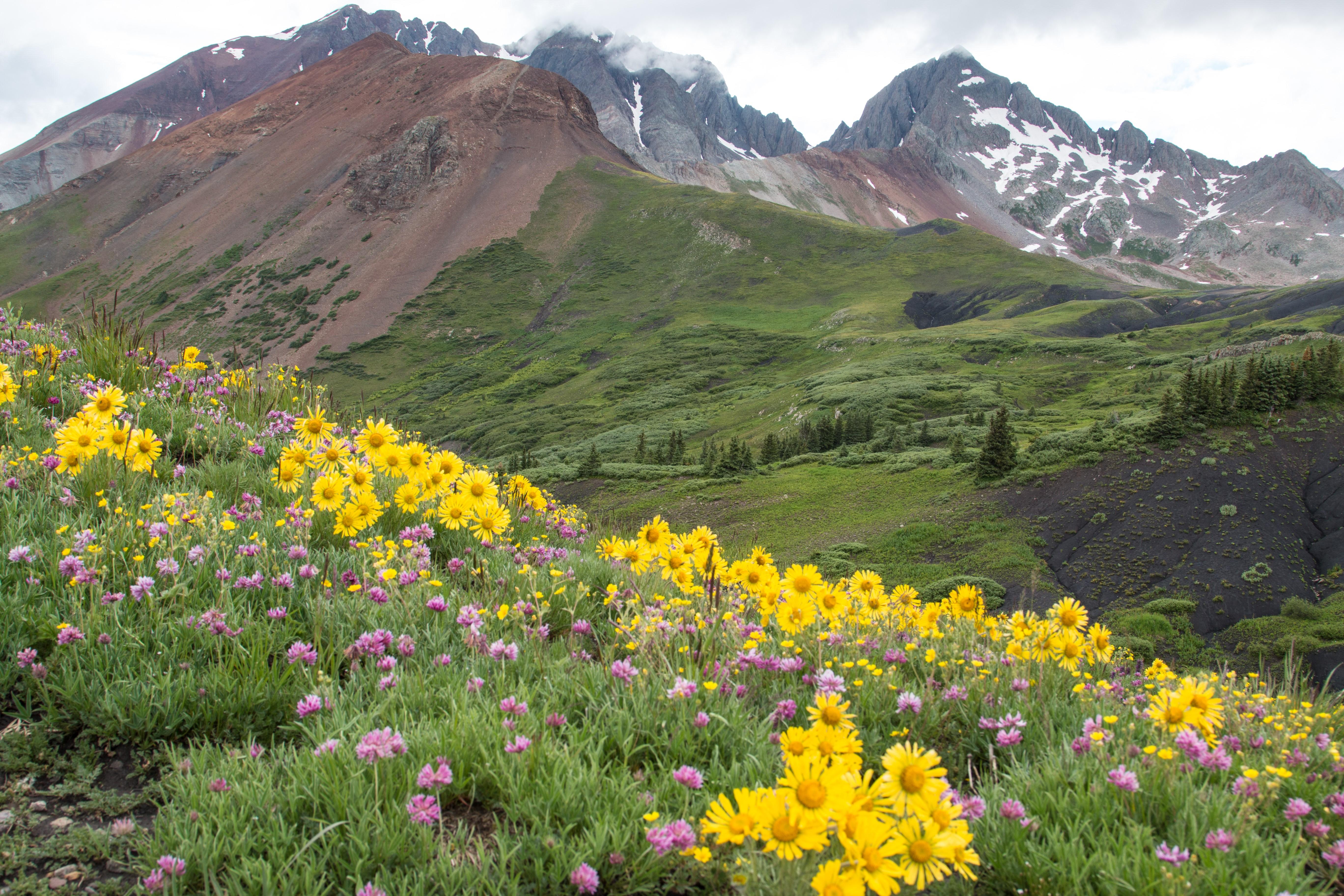 Photo: Wildflower Hikes