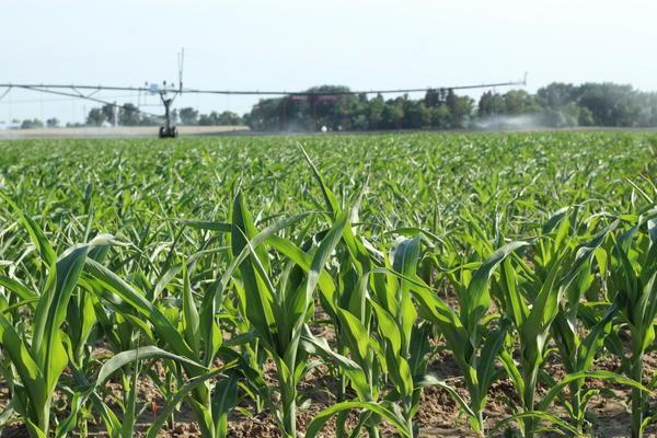 A center pivot sprinkler irrigates crops in eastern Colorado.