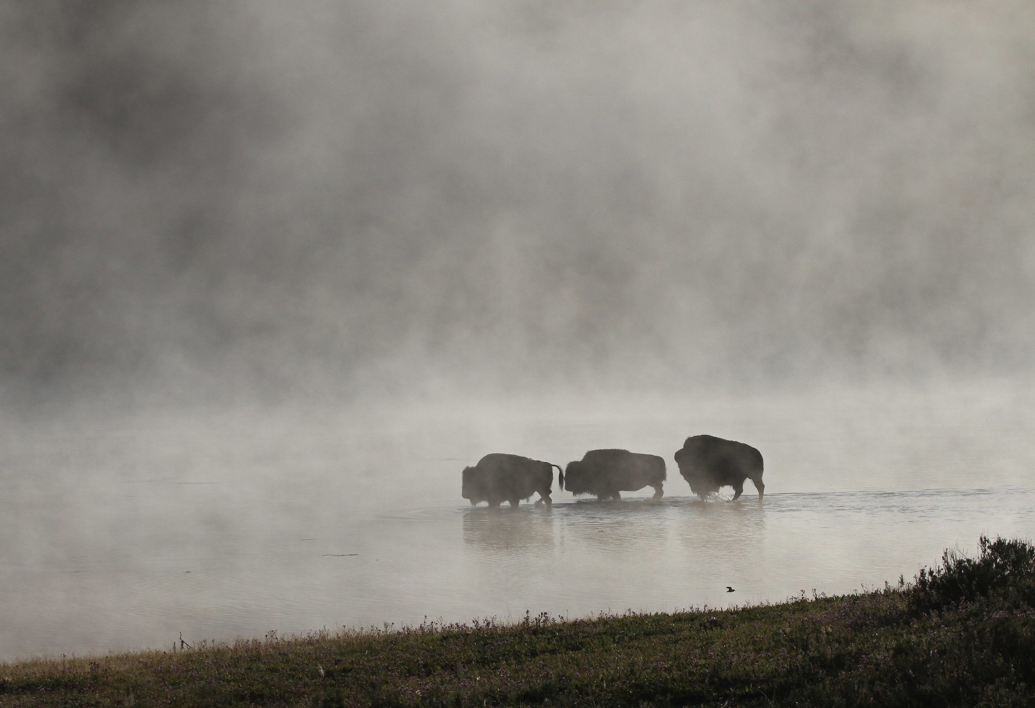 Photo: Bison 4