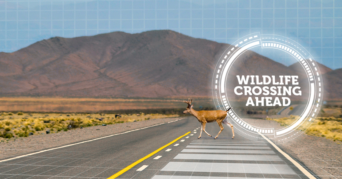 Photo: RoadX Rural Road Challenge 1 | Deer crossing road with typography- Courtesy of CDOT
