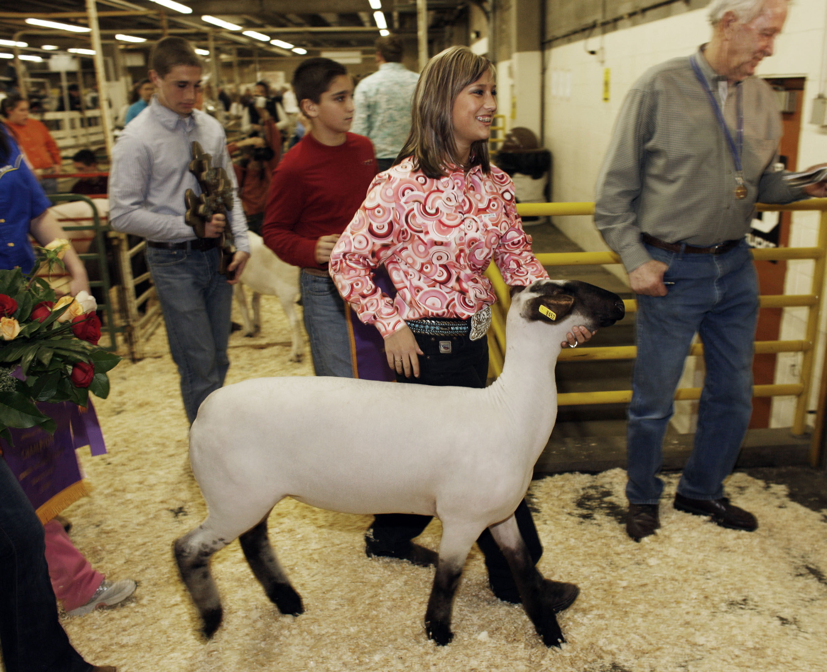 Photo: Blackface Lamb at National Western Stock Show (AP Photo)