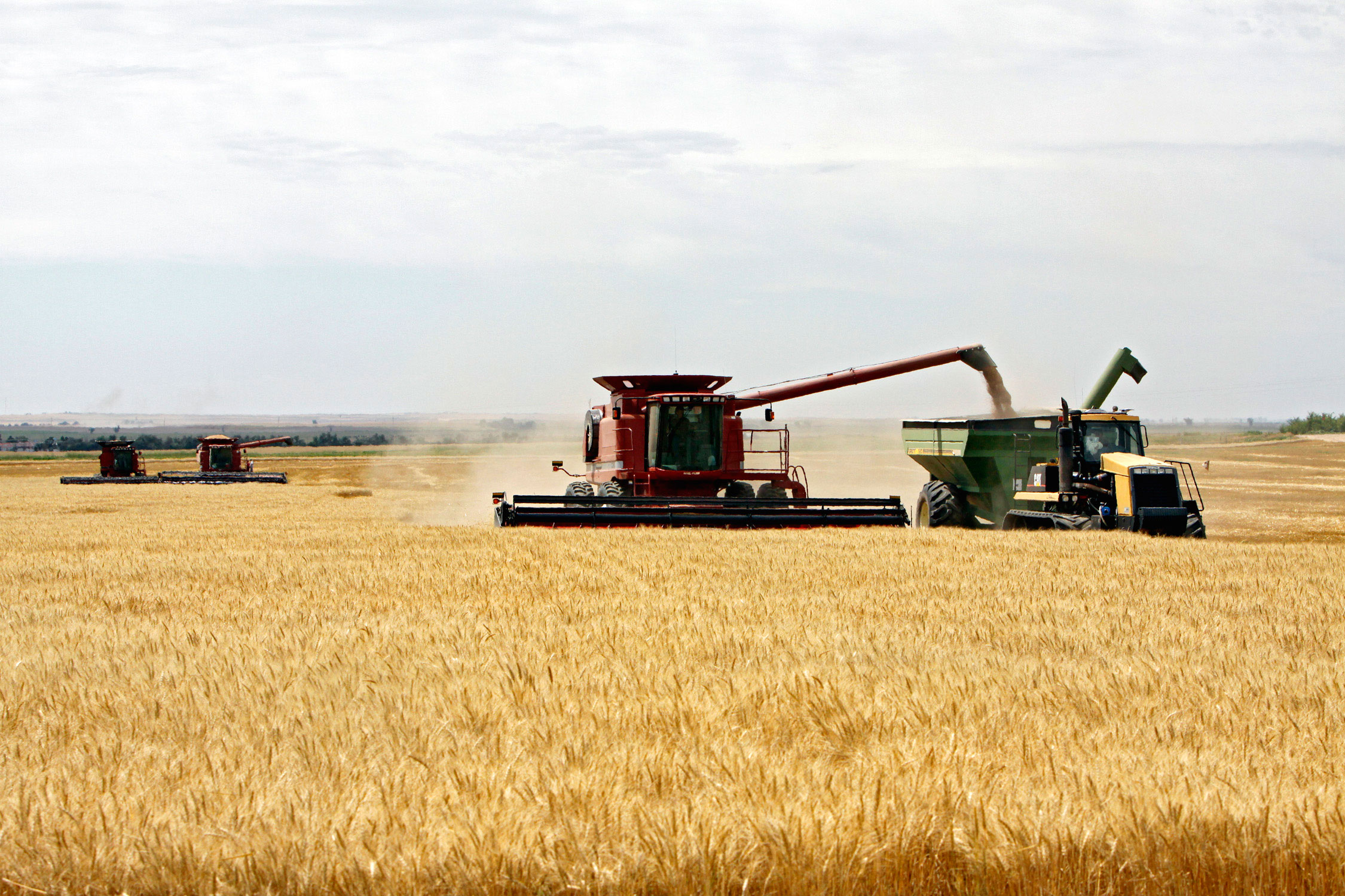 Photo: Wheat Harvest Farm Roggen Colorado