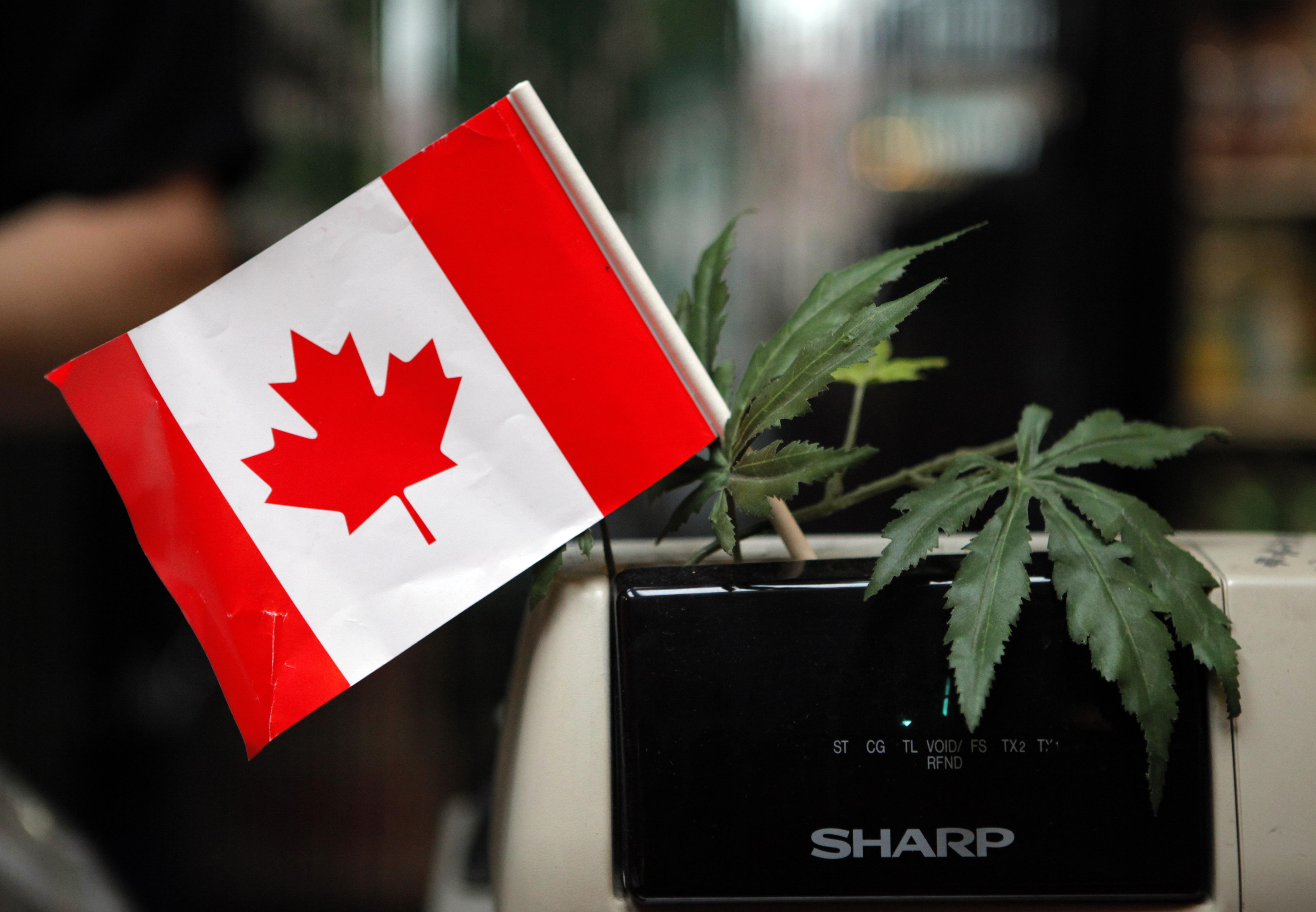 Photo: Marijuana in Canada (AP Photo)