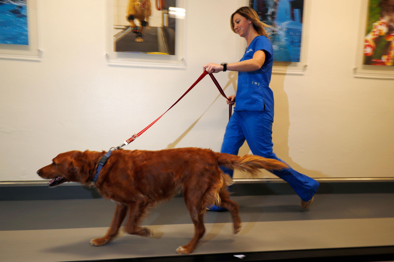 Photo: Marijuana Pet Medicine 2 | Kelsie Condon And Zach - AP