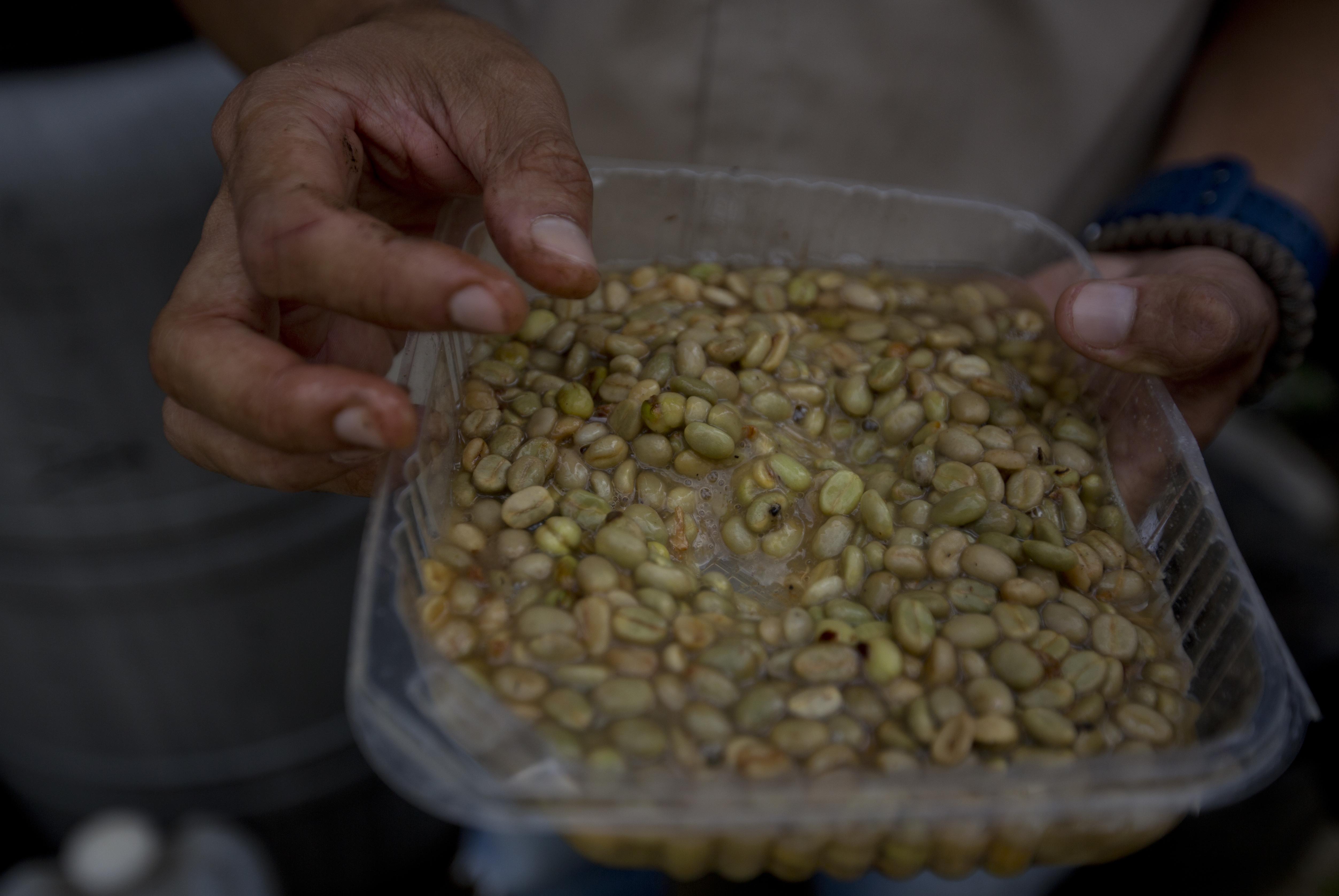 Photo: Coffee Beans Venezuela - AP