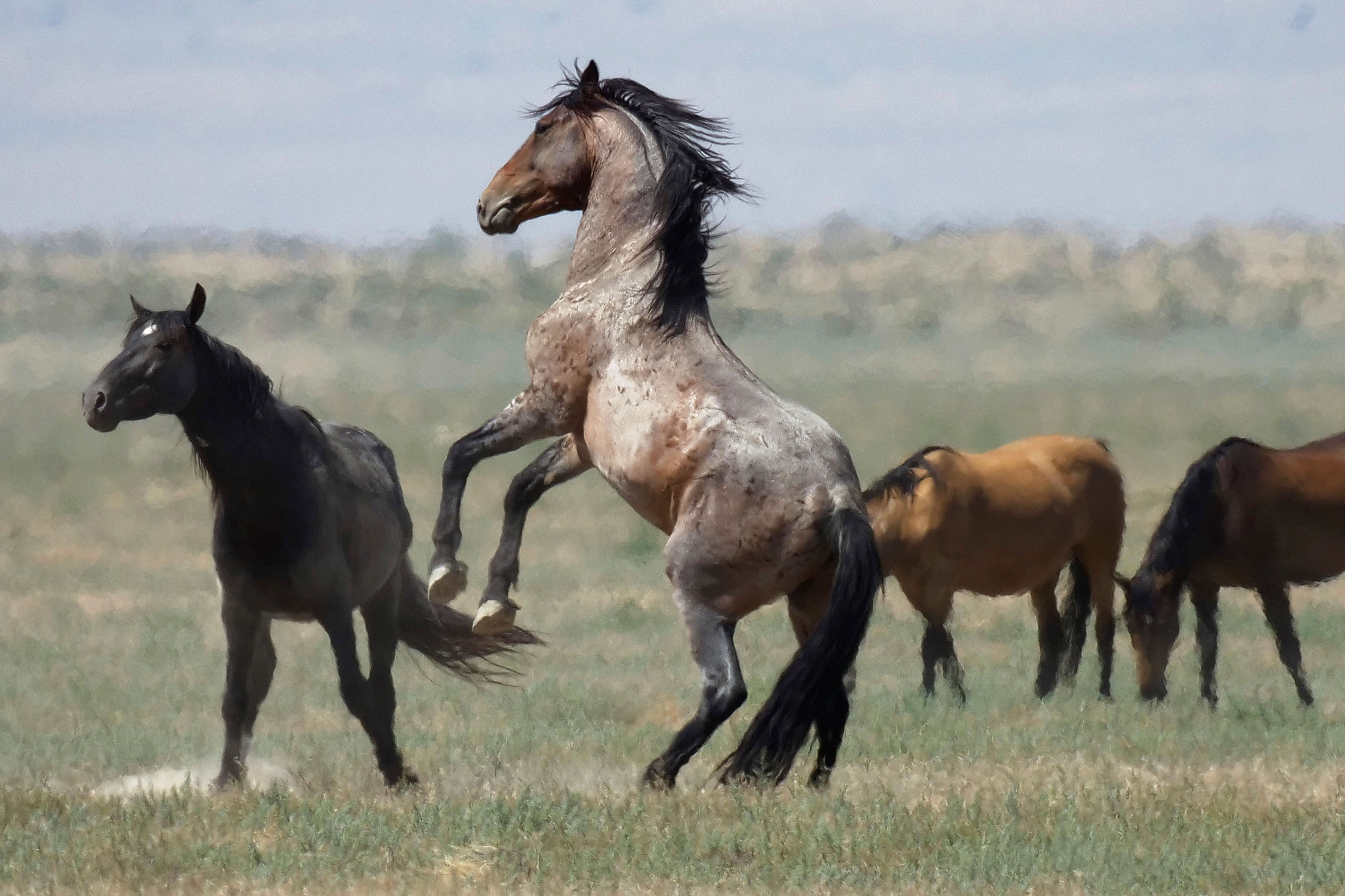 Lethal Measures Are Off The Table For Controlling The West S Wild Horse Herds Colorado Public Radio