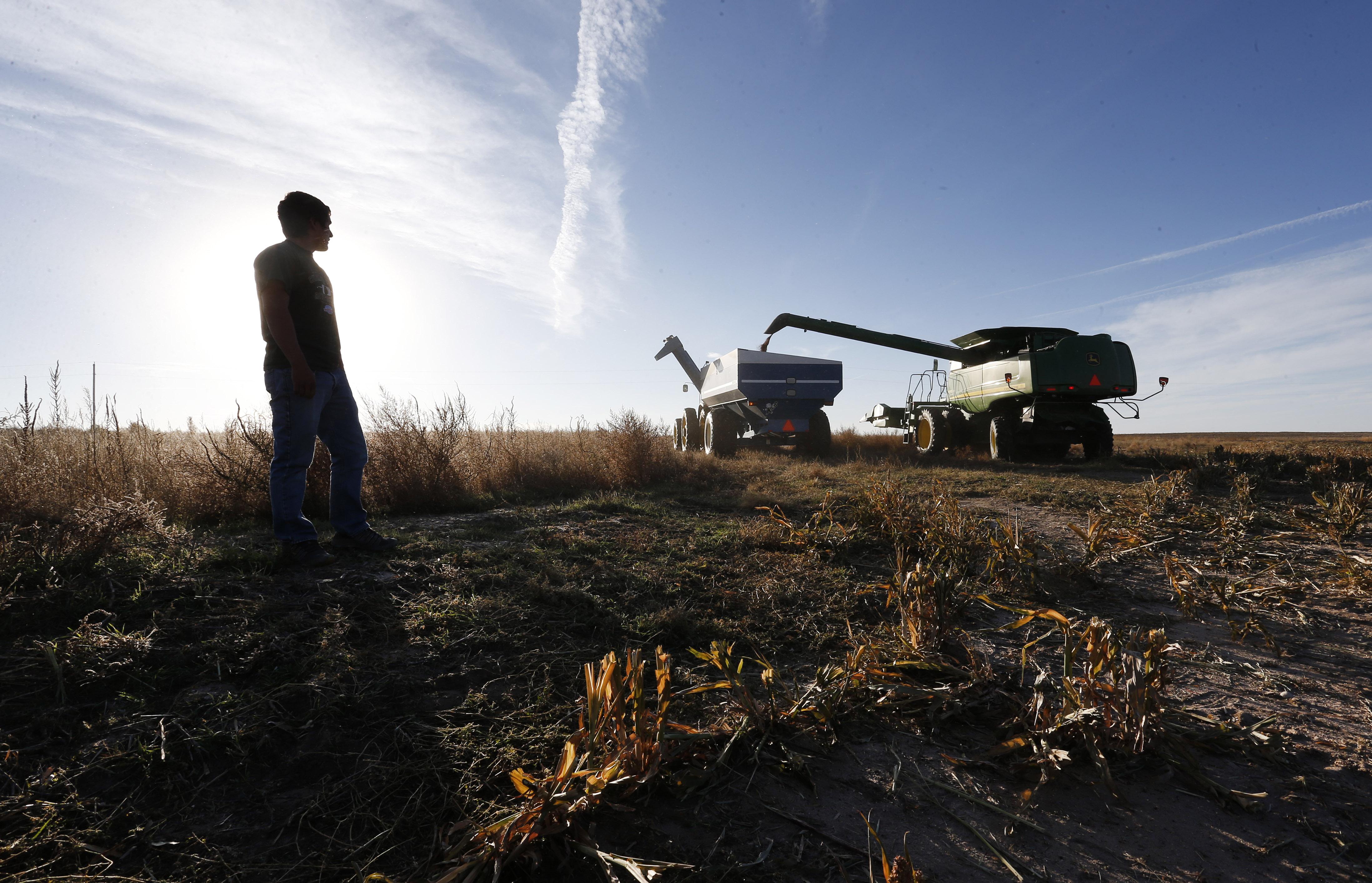 Photo: Harvest, Yuma, Colorado