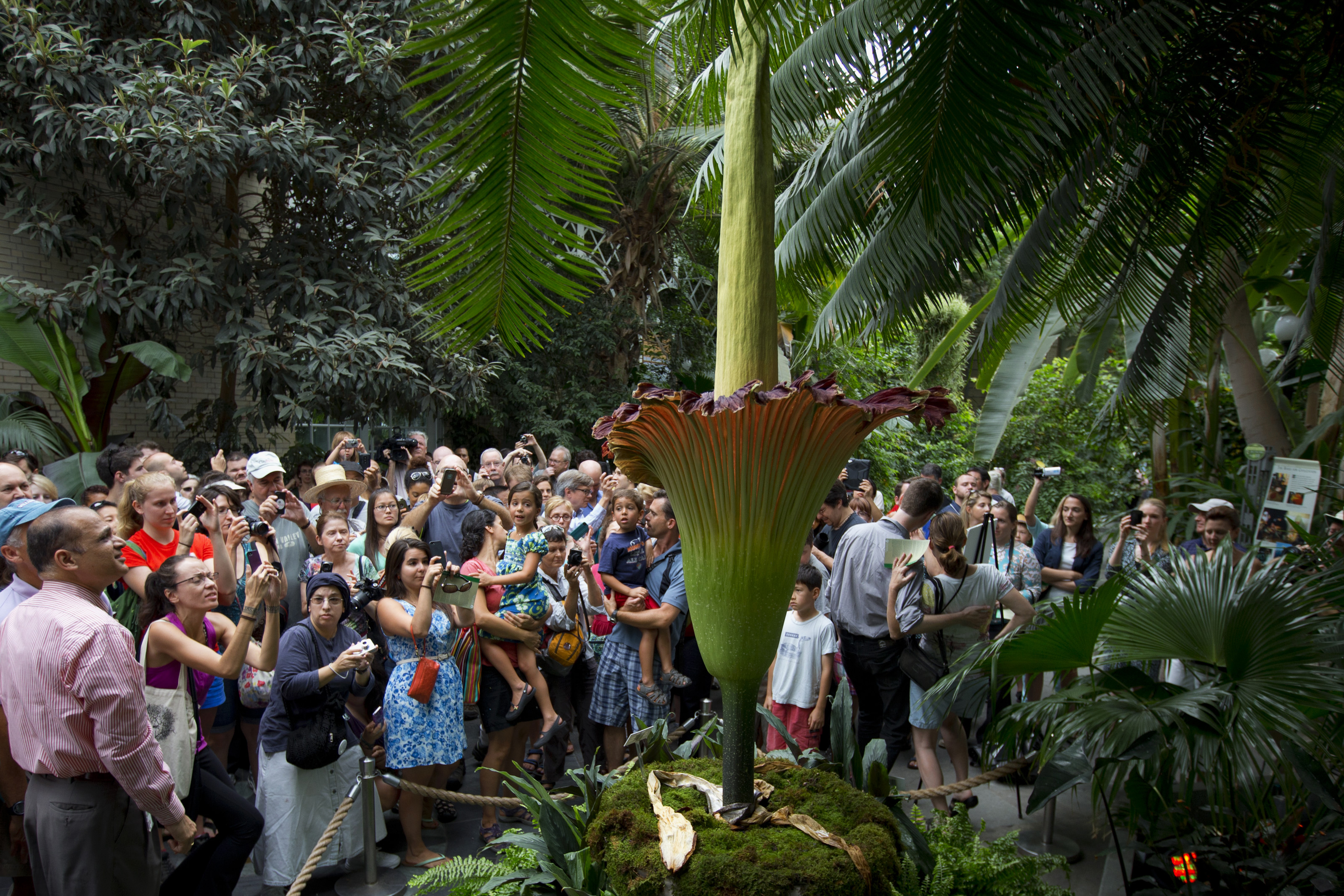 Photo: Corpse Flower in DC
