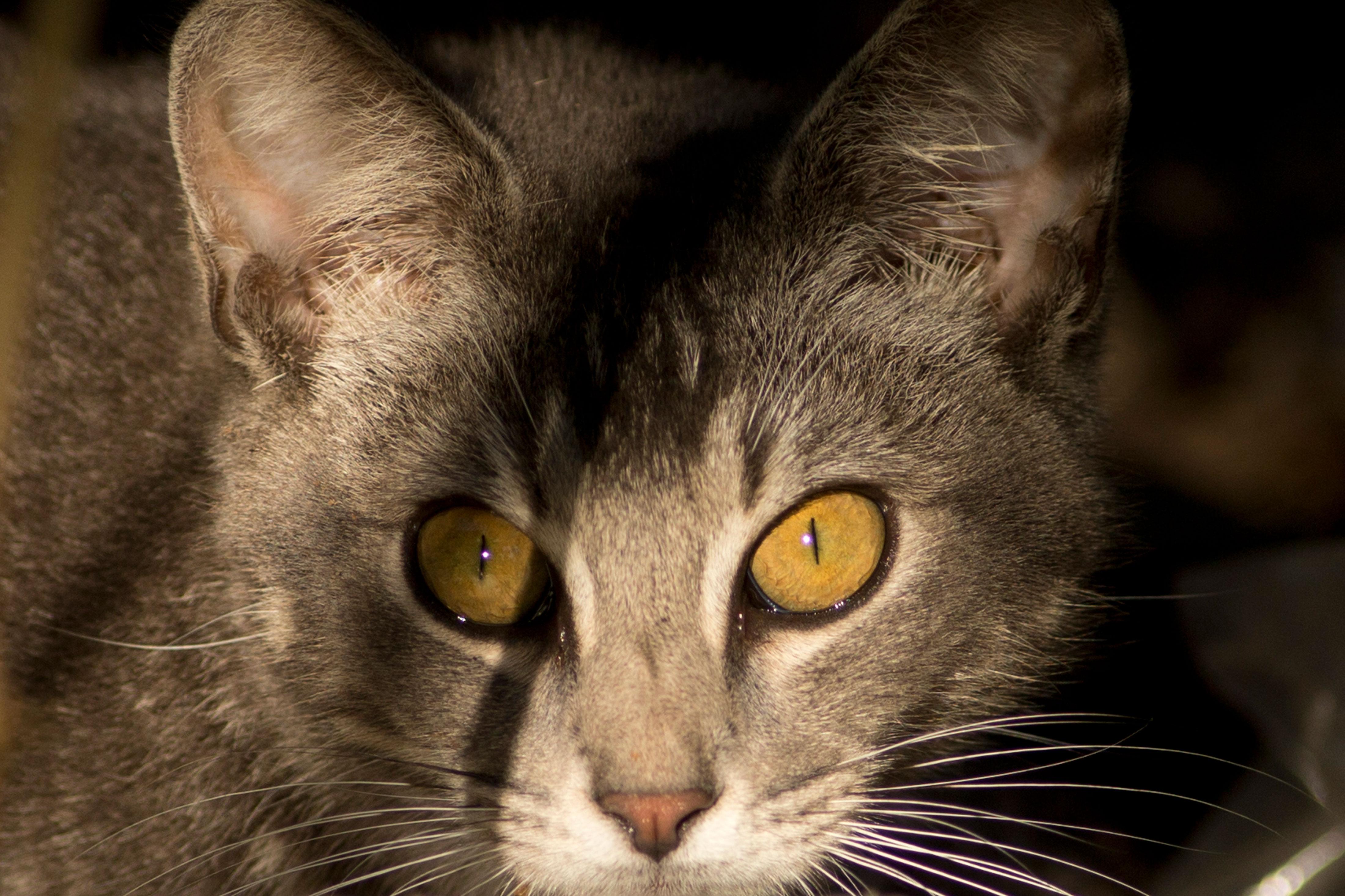 Photo: Feral Cat - AP