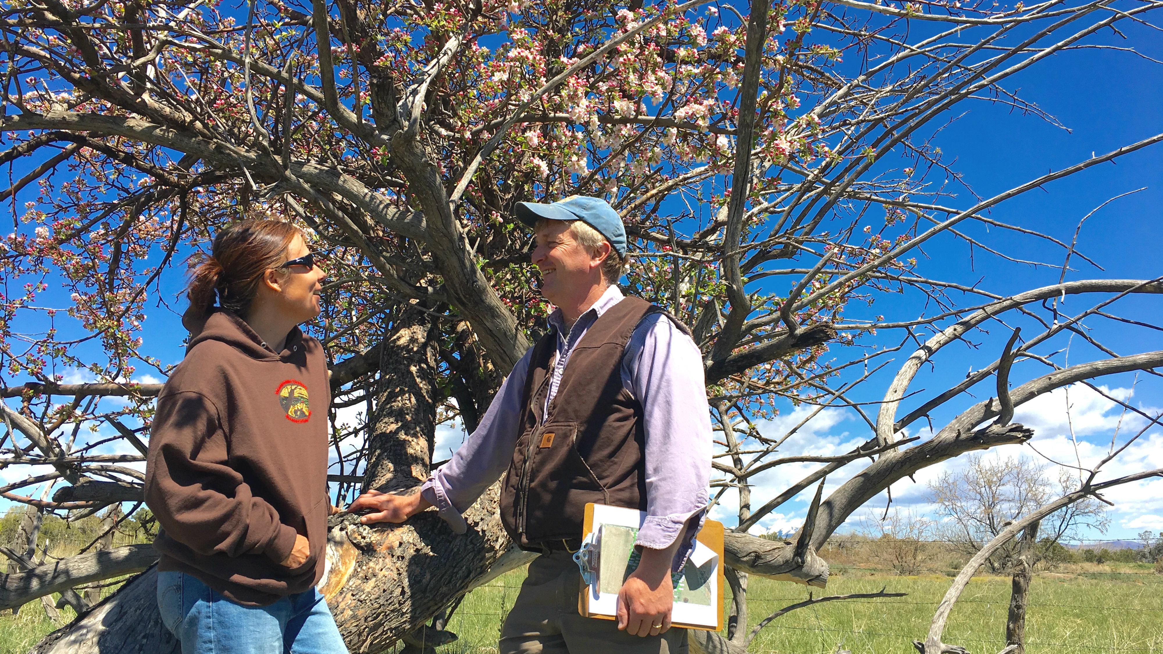 Photo: Addie and Jude Schuenemeyer apple tree Cortez