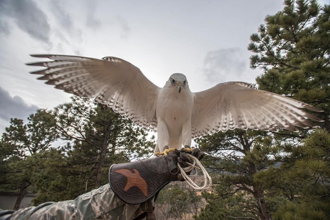 Photo: Aurora the Air Force Academy Falcon