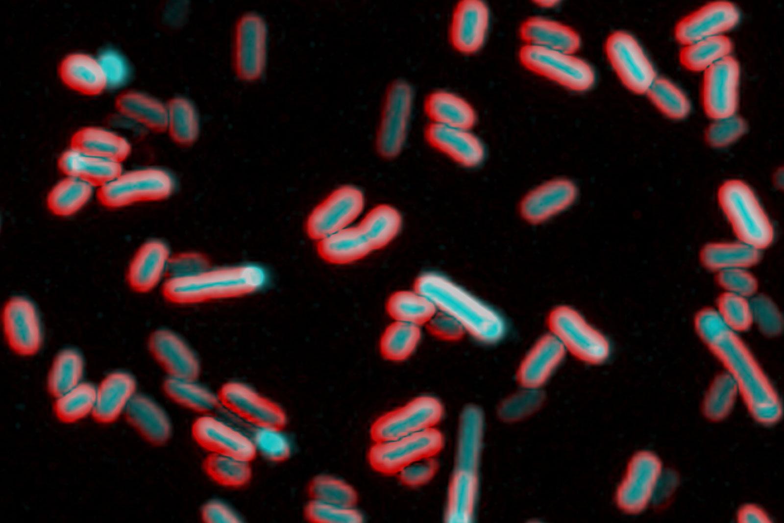 Photo: Bacteria Have Feelings