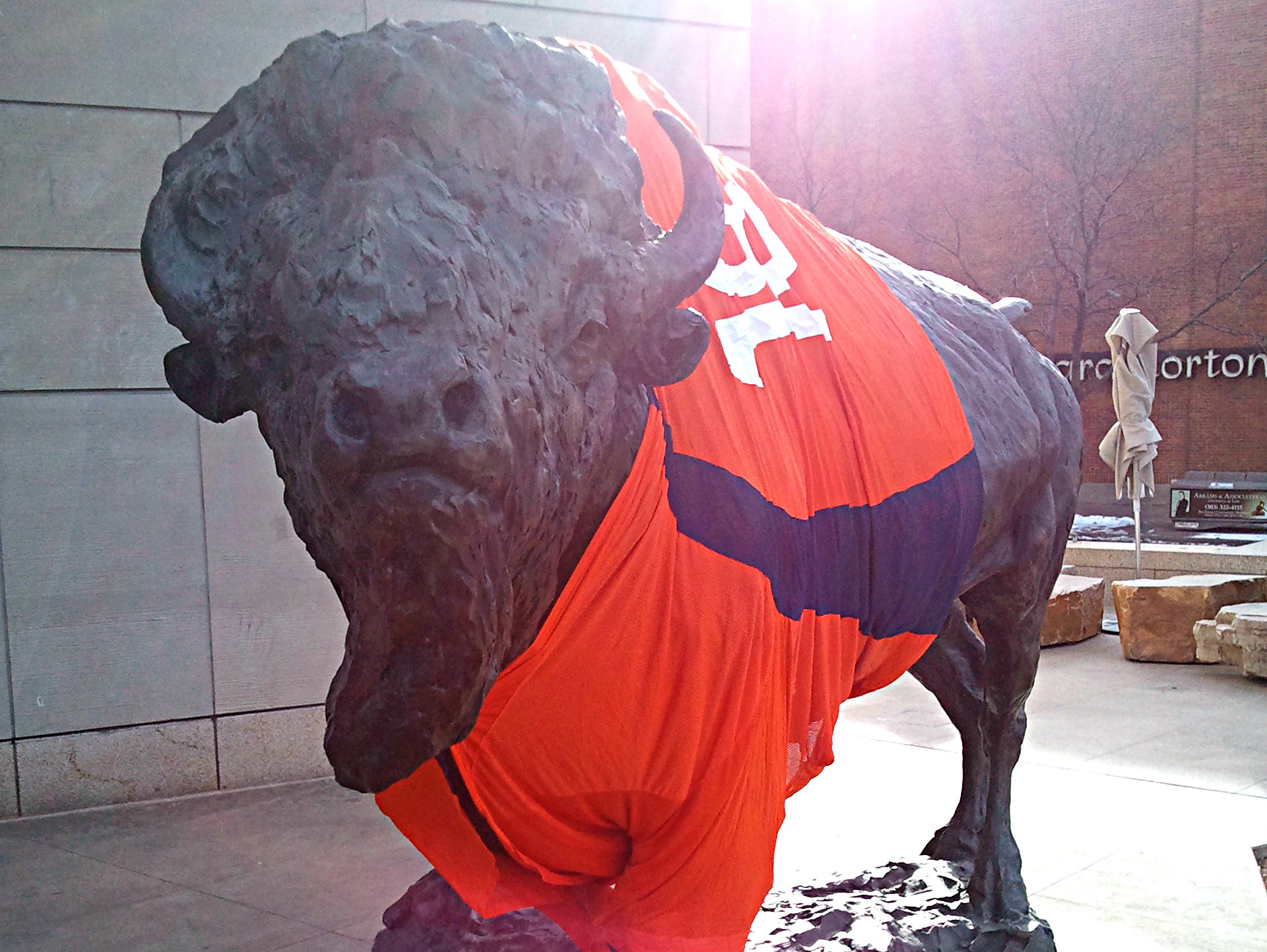 Photo: The bison in front of History Colorado sports a staff-made Broncos jersey