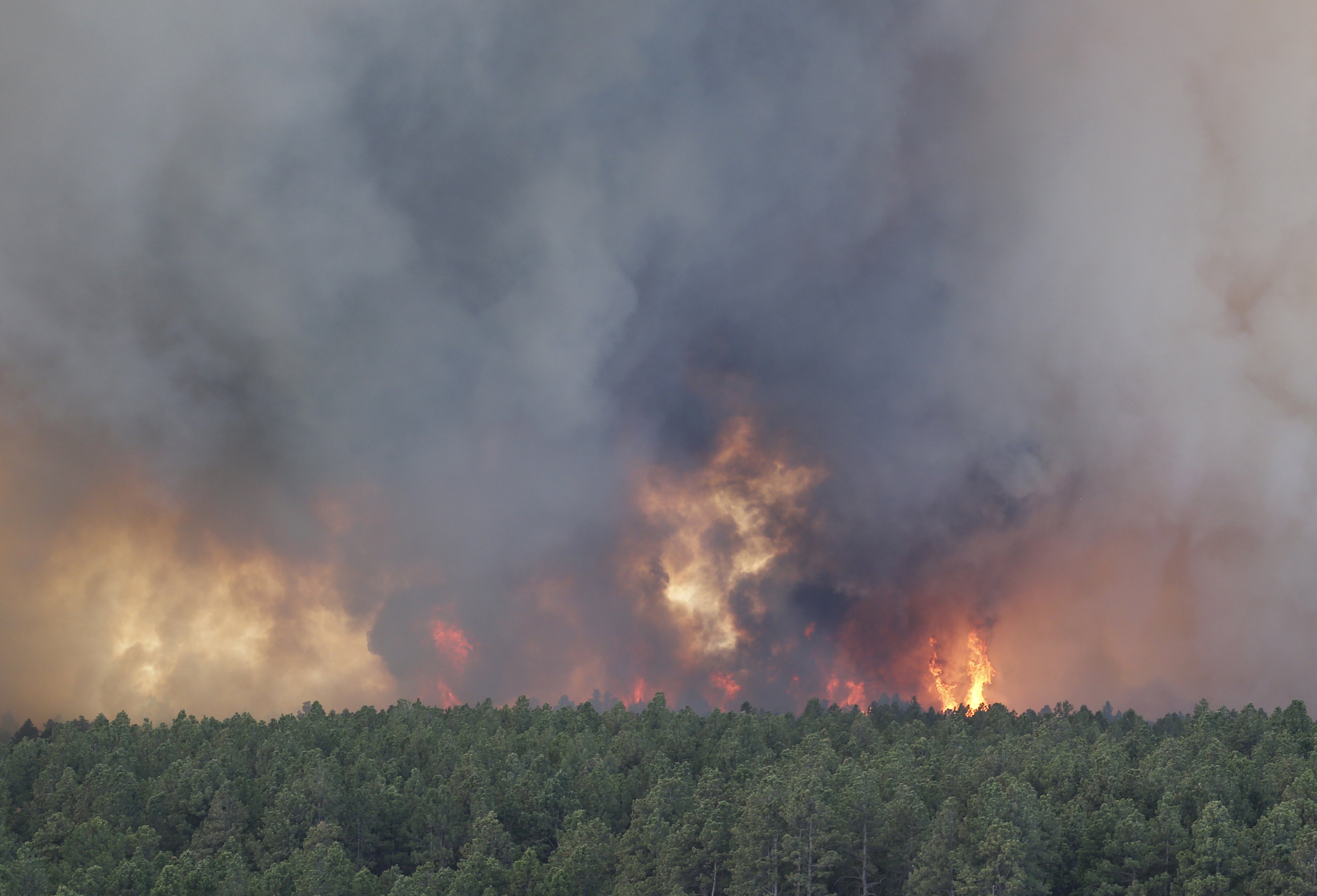 Black Forest Fire 1