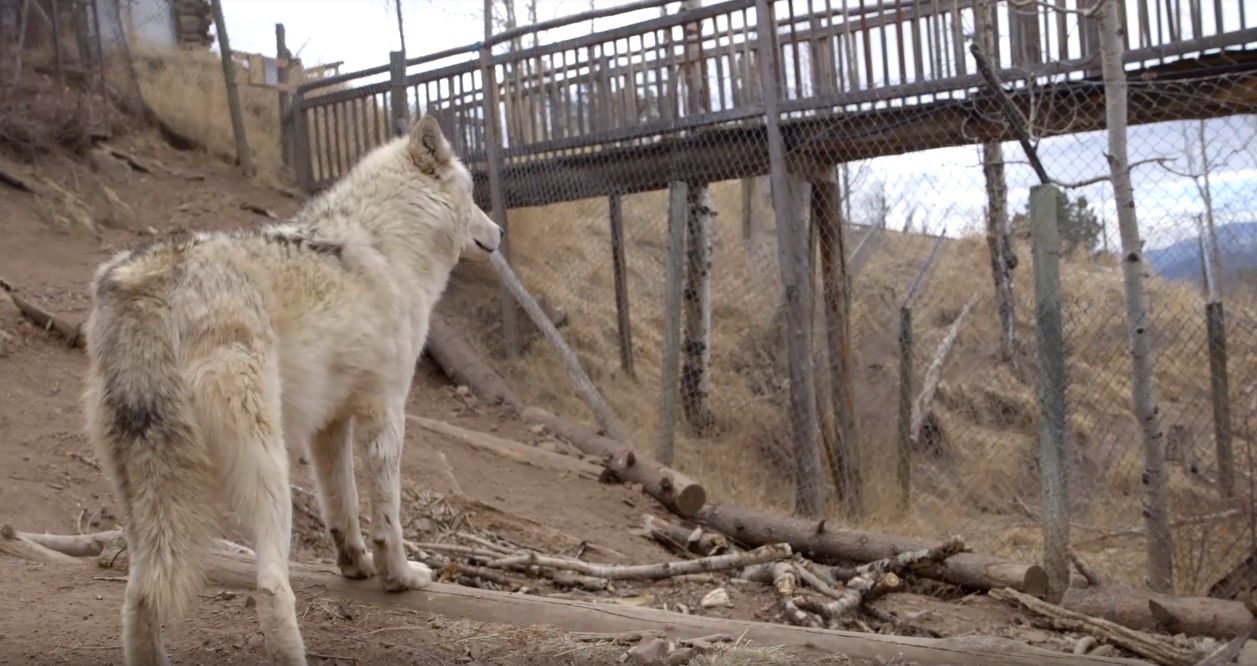 Photo: Mission Wolf Sanctuary 2