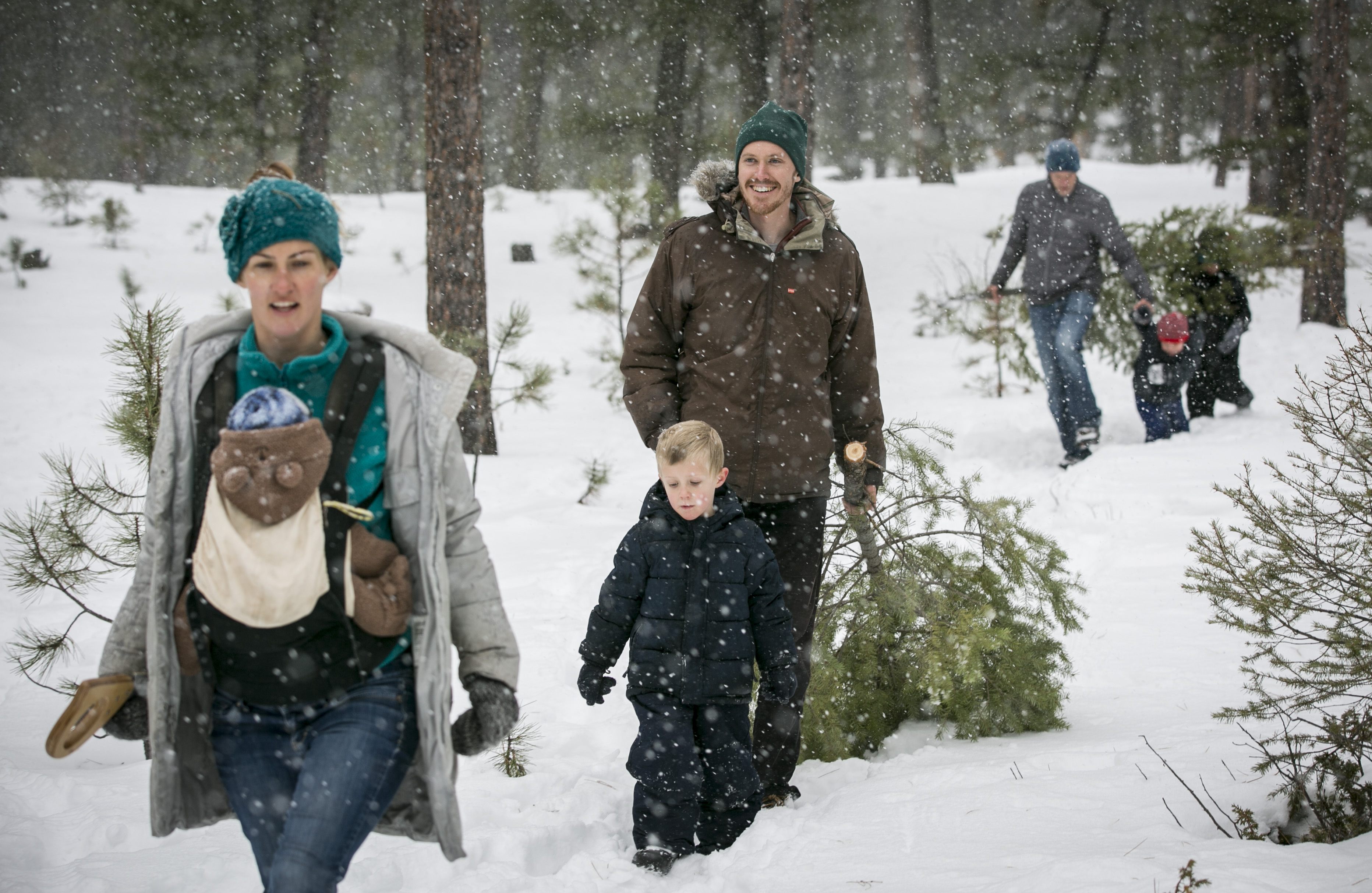 Pike National Forest Christmas Tree Cutting 2019 How To Nab A Cut Your Own Christmas Tree From A Front Range