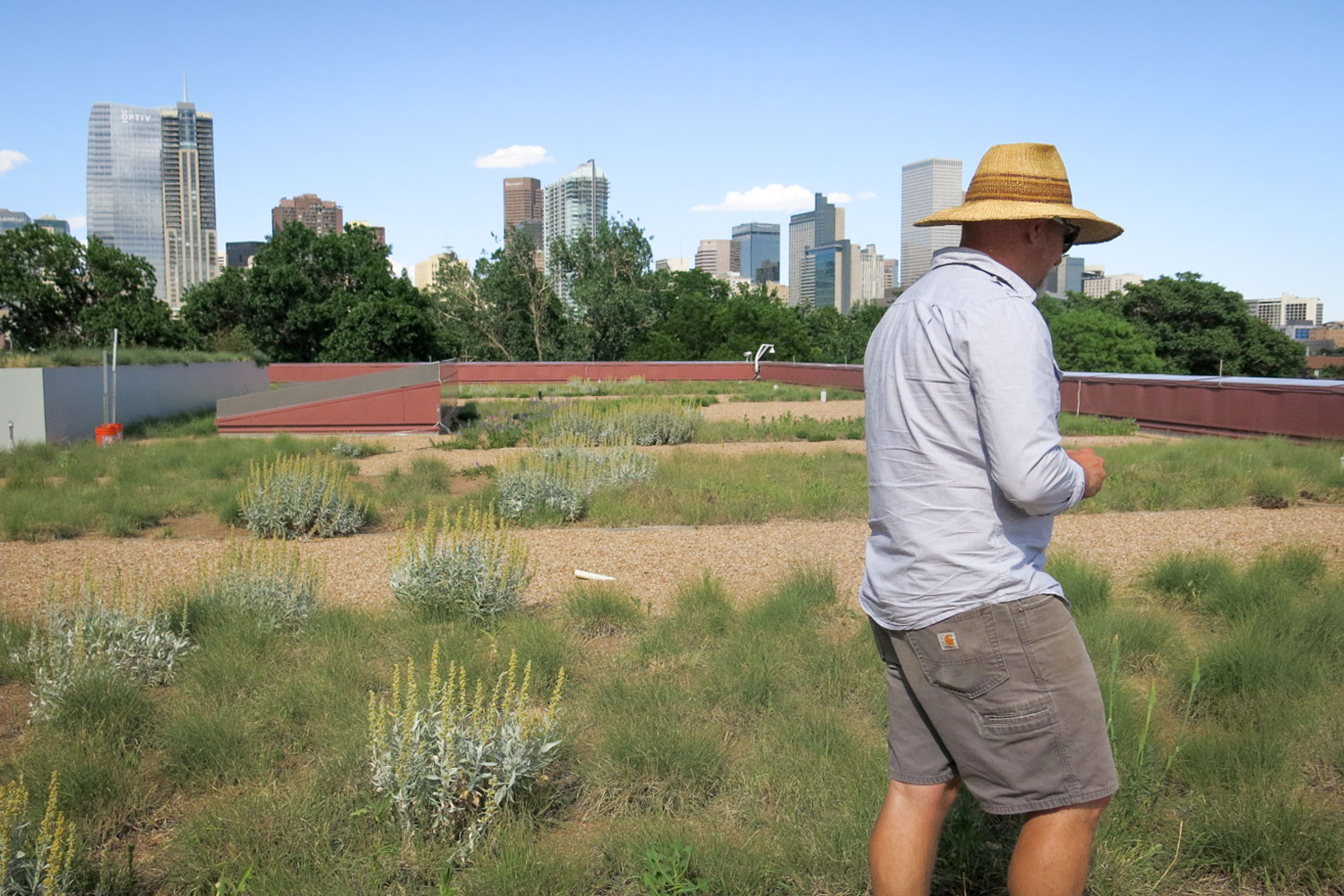Photo: Denver Green Roof Changes 1 | Andy Creath on roof - GHood