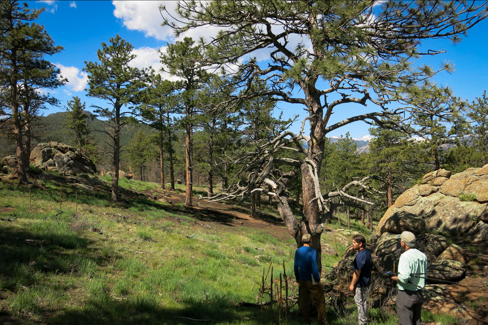 Photo: Forest History 1 | Hall Ranch Forest Inspection - GHood