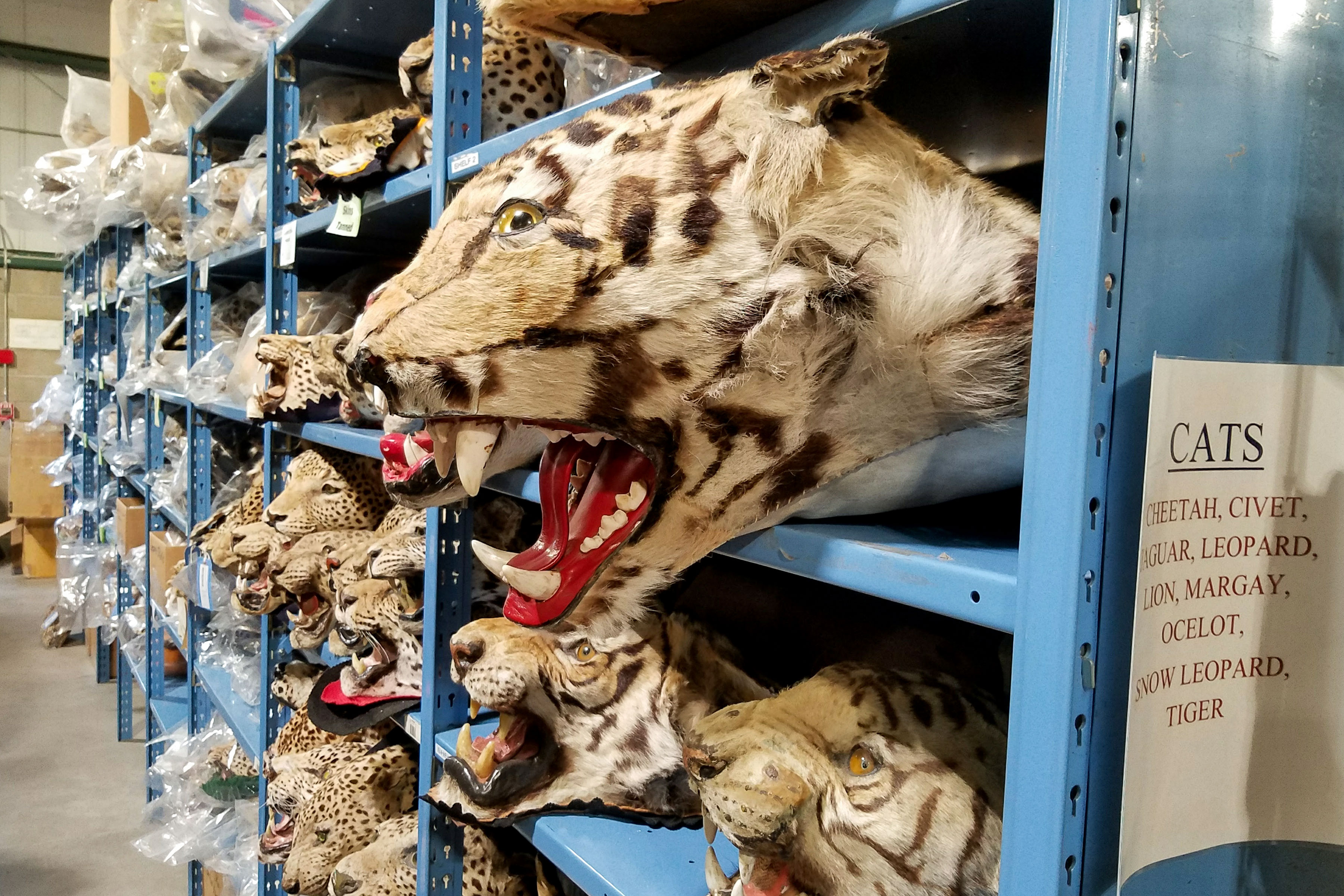 Photo: Wildlife Repository Training 4 - SBrasch