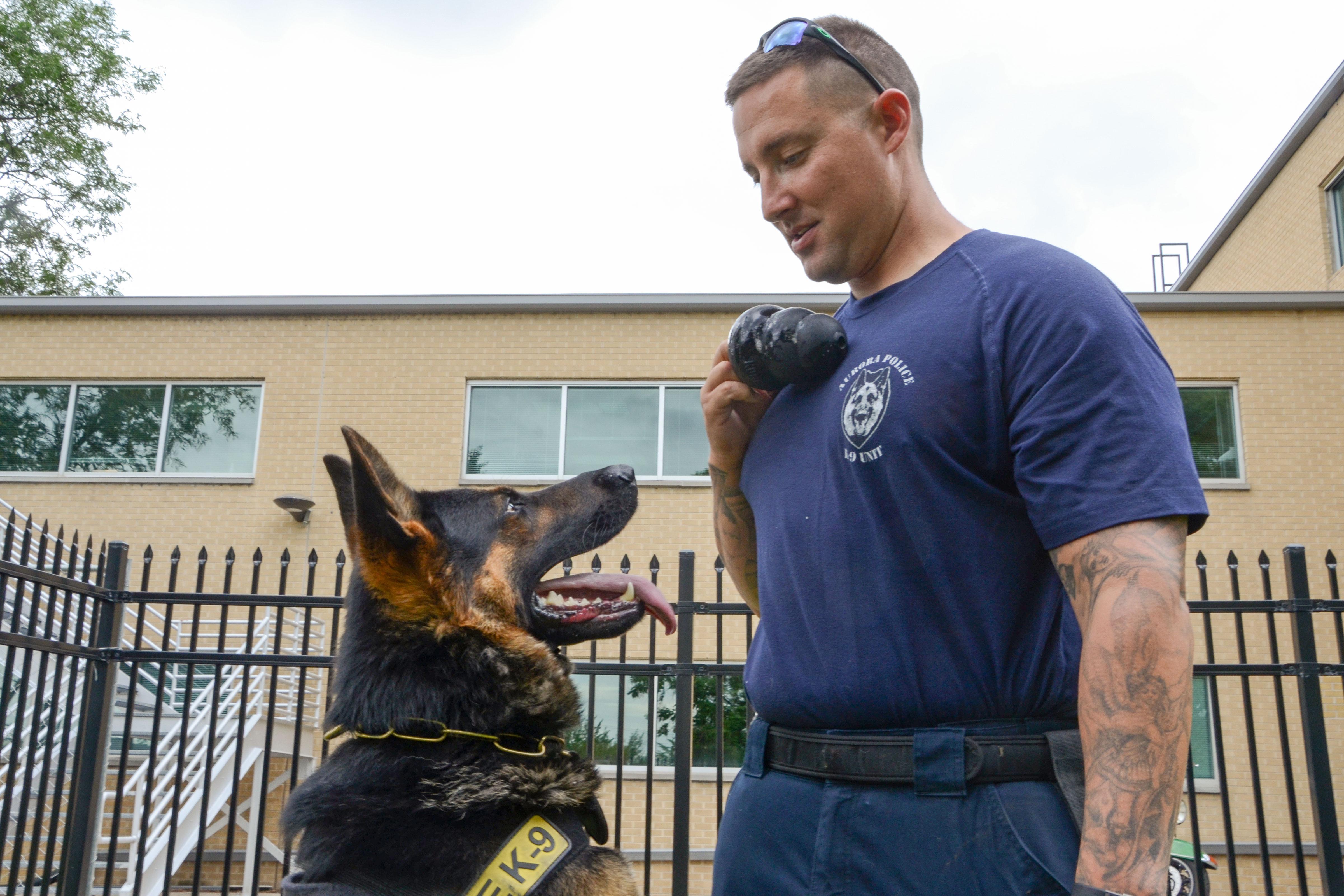 Photo: Pot-Sniffing Dogs 2 | Aurora PD Deuce and Sgt Samuels - SBrasch