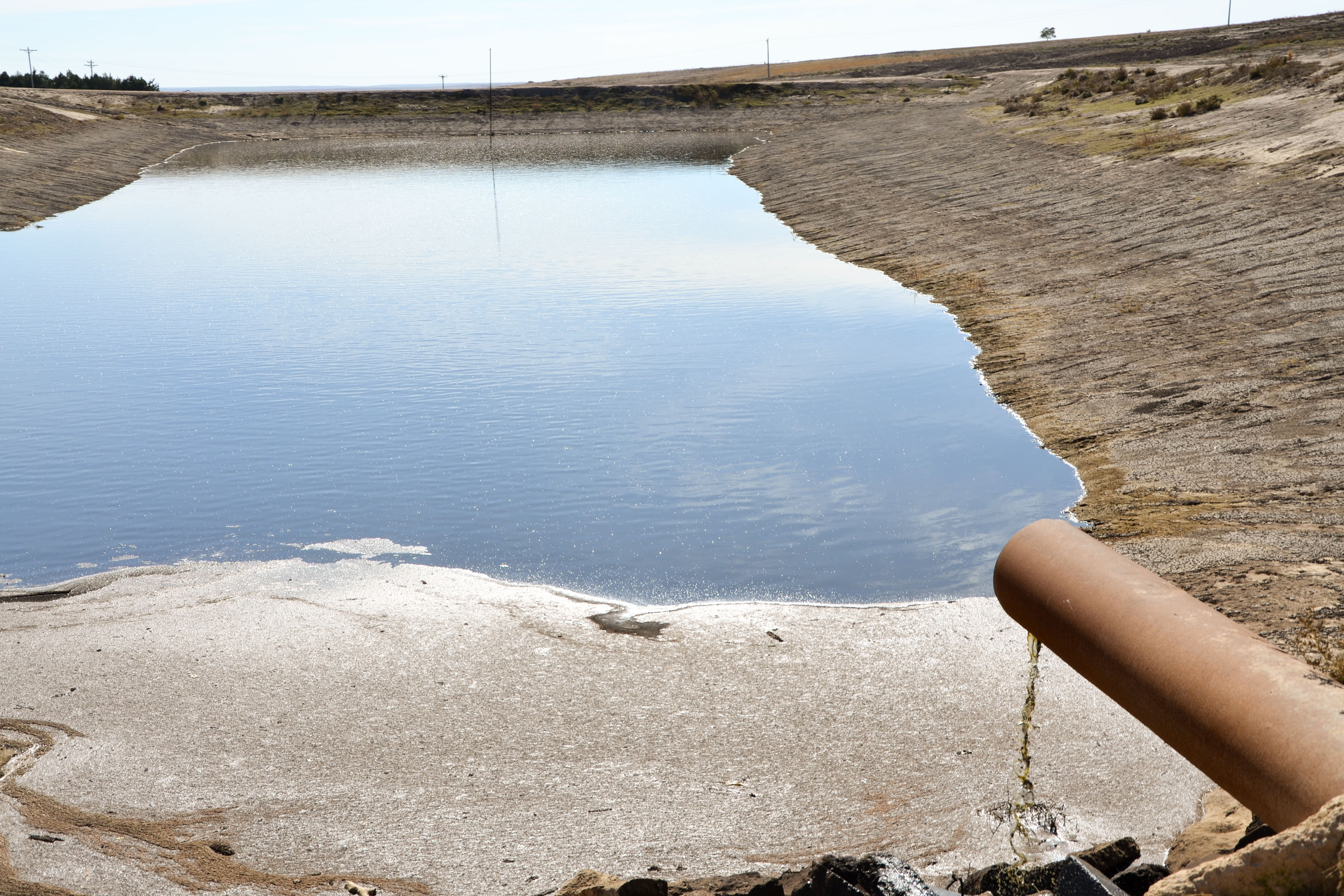 Photo: Feedlot Fish Kill 3 | 5 Star Retention Pond - SBrasch