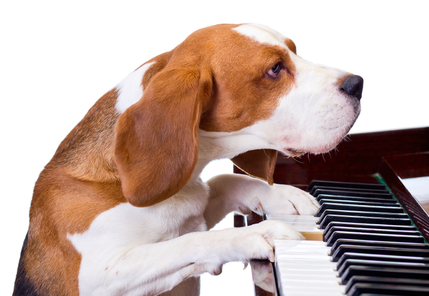 Photo: Dog at Piano