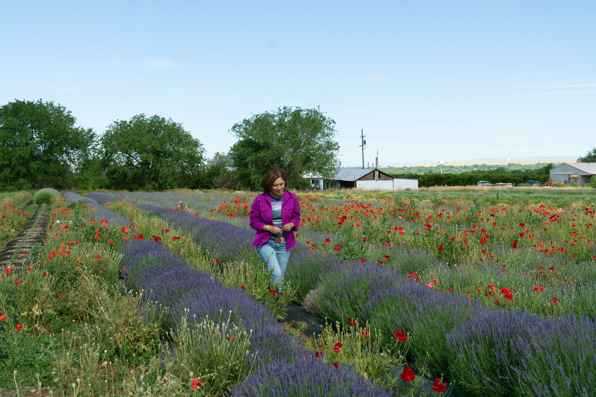 Photo: Western Slope Lavender Farming | Paola Legarre