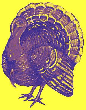 Photo: Duotone turkey
