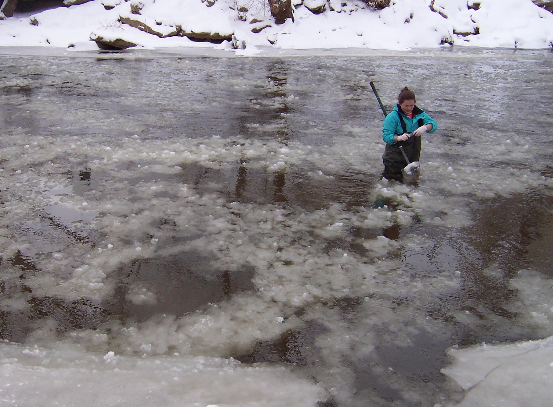 Image: Flood Study Emily Garner