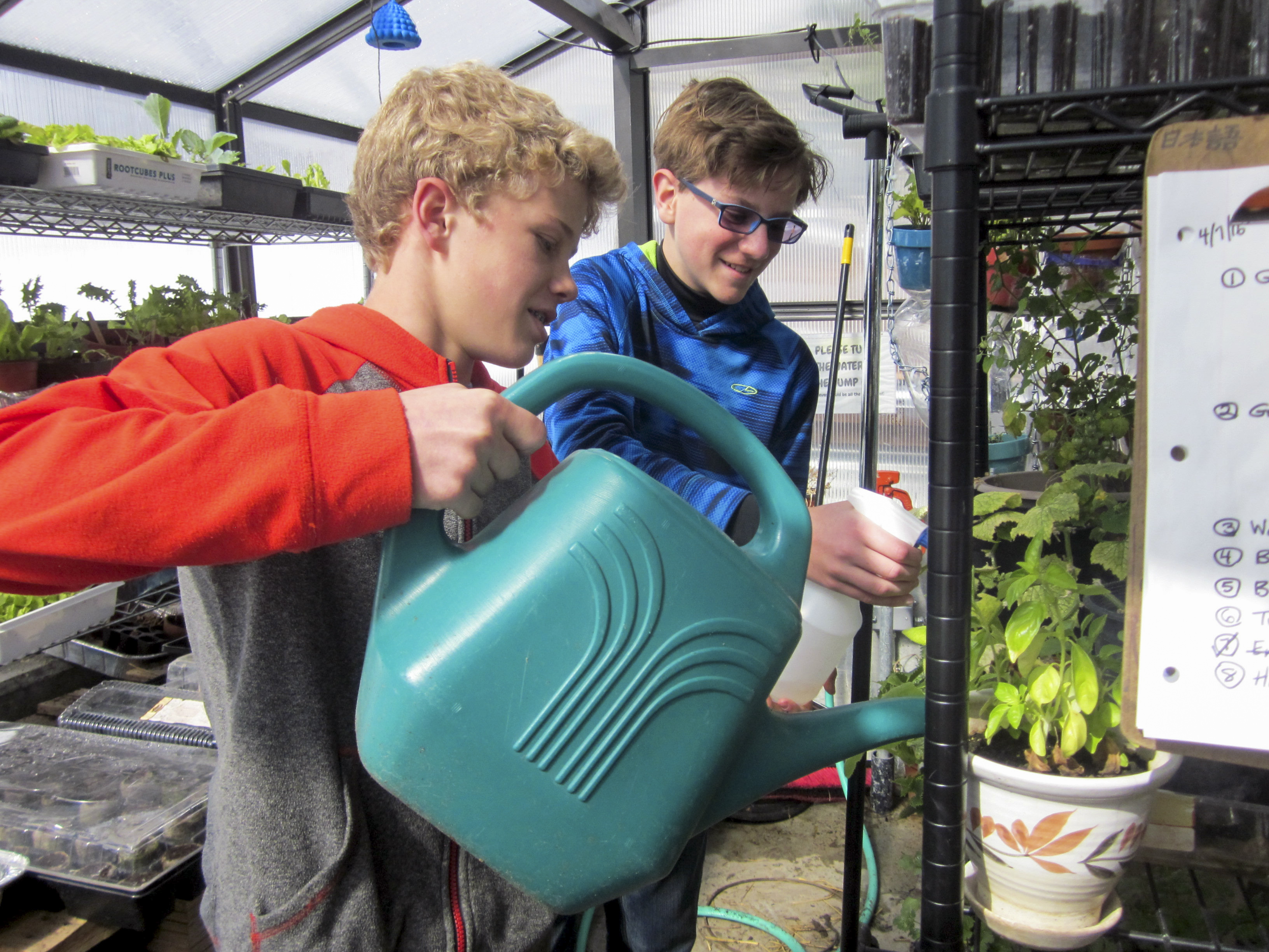 Photo: Mackintosh Academy 3 | Watering plant
