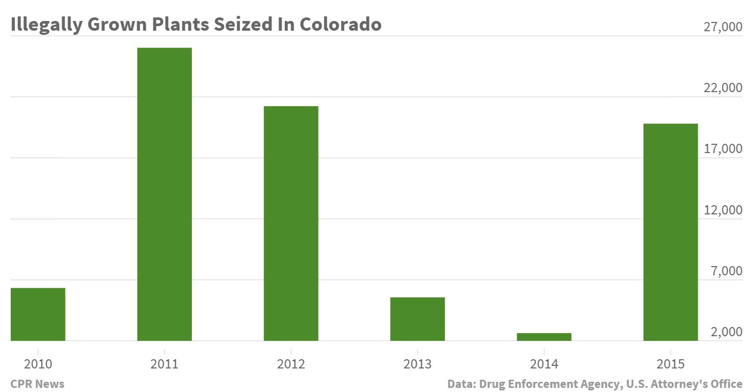 Chart: Colorado Marijuana Seizures Up (Staff)