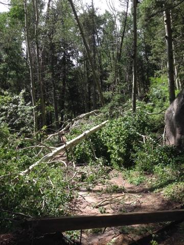 Photo: Blowdown Damage 7