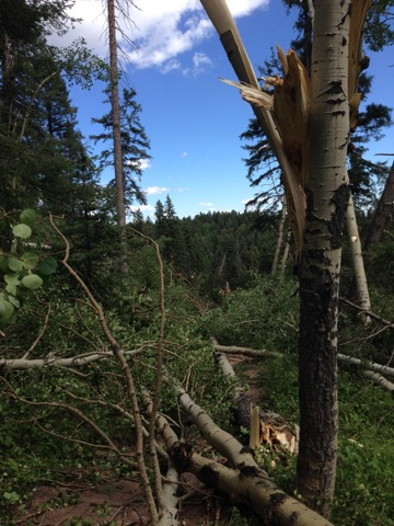 Photo: Blowdown Damage 8
